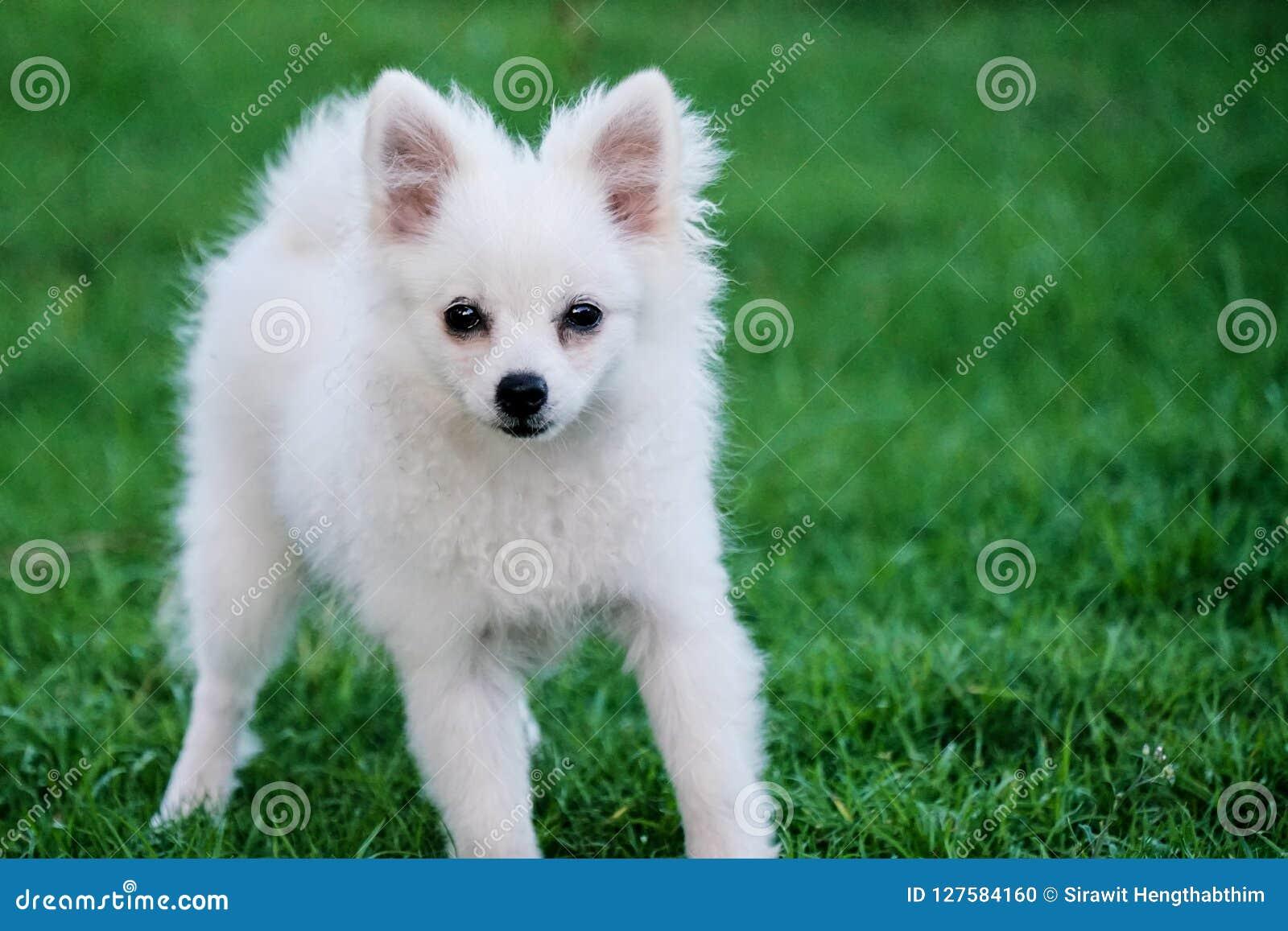 Pequeño perro blanco lindo que se sienta en la hierba