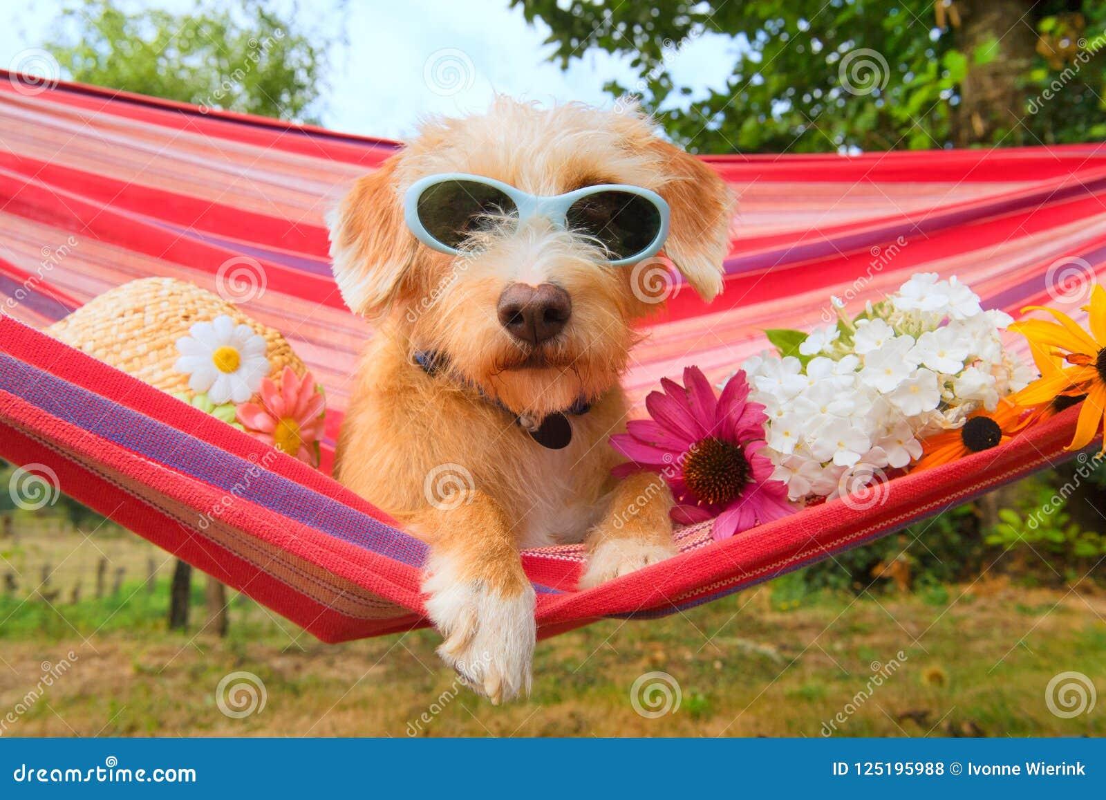 Pequeño perro divertido el vacaciones en hamaca