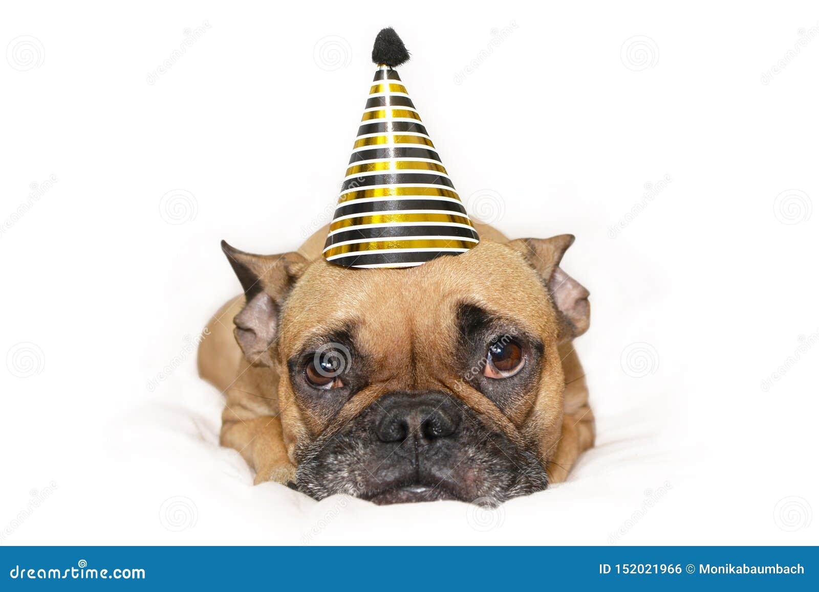 Pequeño perro lindo del dogo francés con oro y el sombrero negro del partido del Año Nuevo en la cabeza que miente en el fondo bl