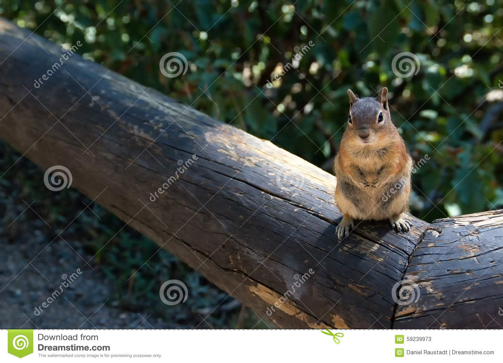 Pequeño Rocky Mountain Squirrel amistoso