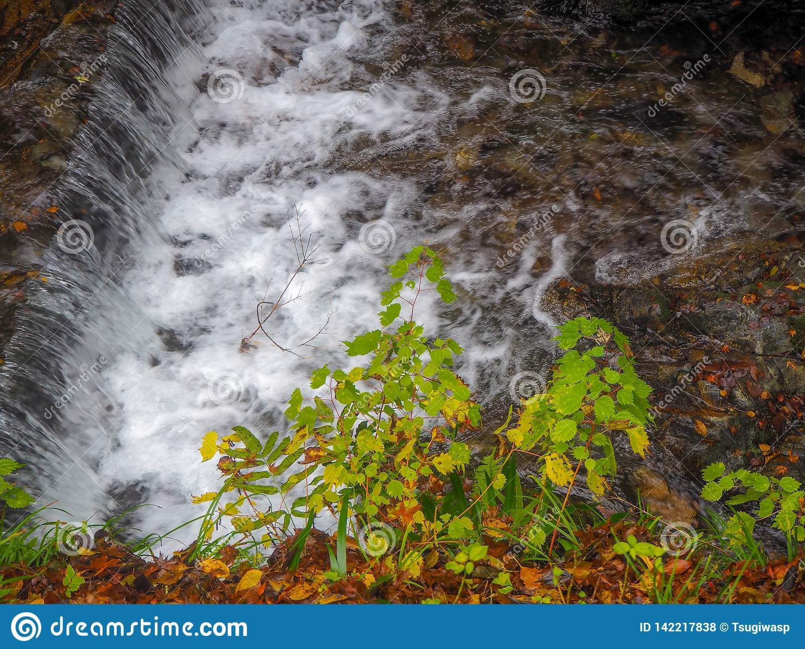 Pequeños árboles verdes al lado de una pequeña cascada