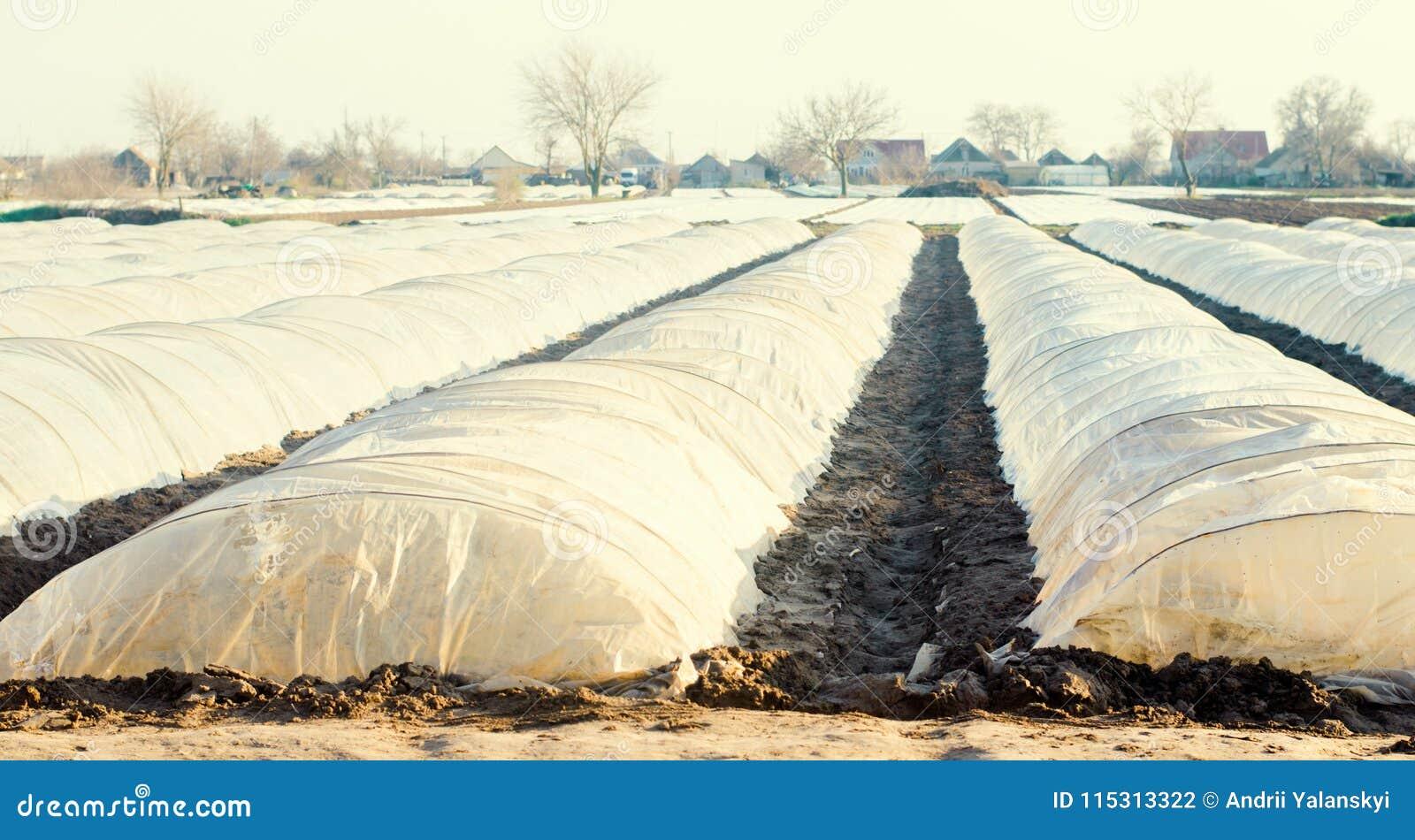 Pequeños invernaderos para las verduras en el campo Agricultura Agroculture farming