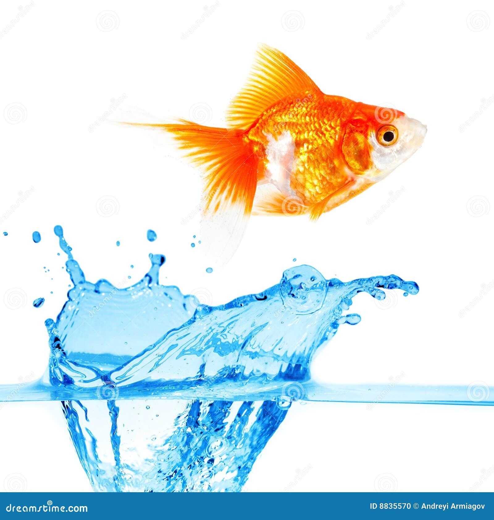 Pequeños pescados del oro