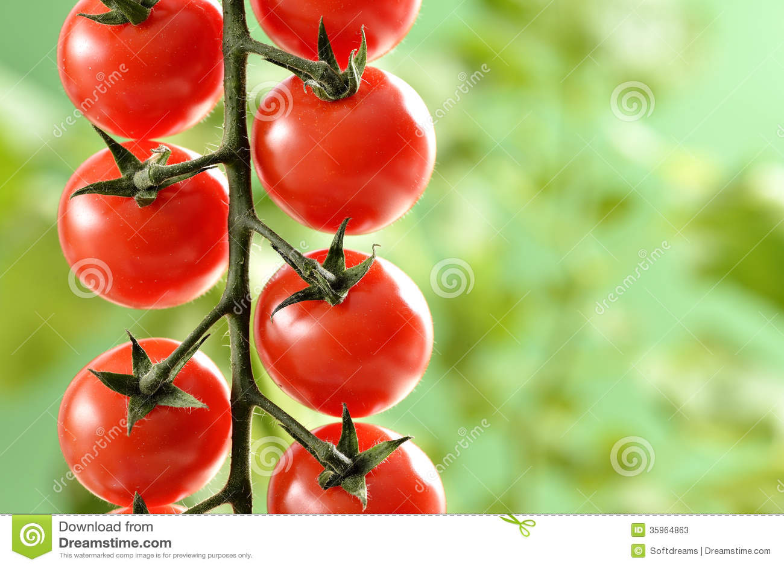 Pequeños tomates de cereza