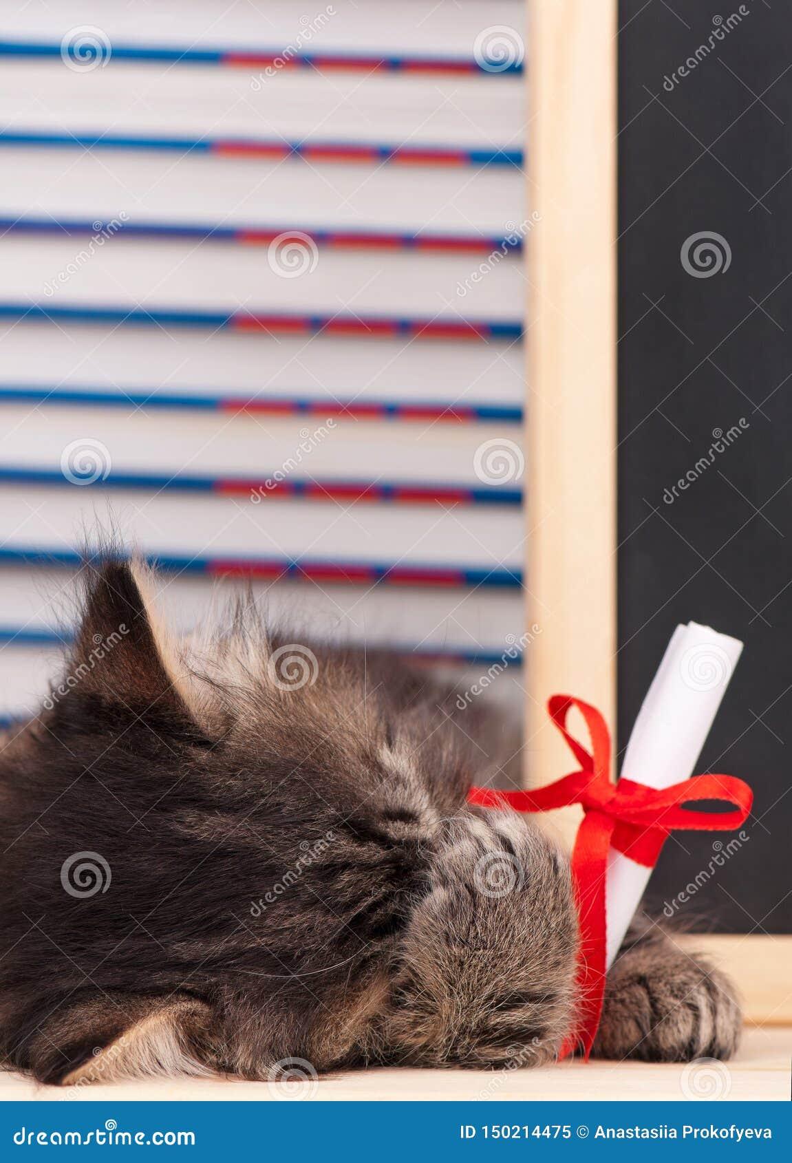 Peque?o gatito cansado