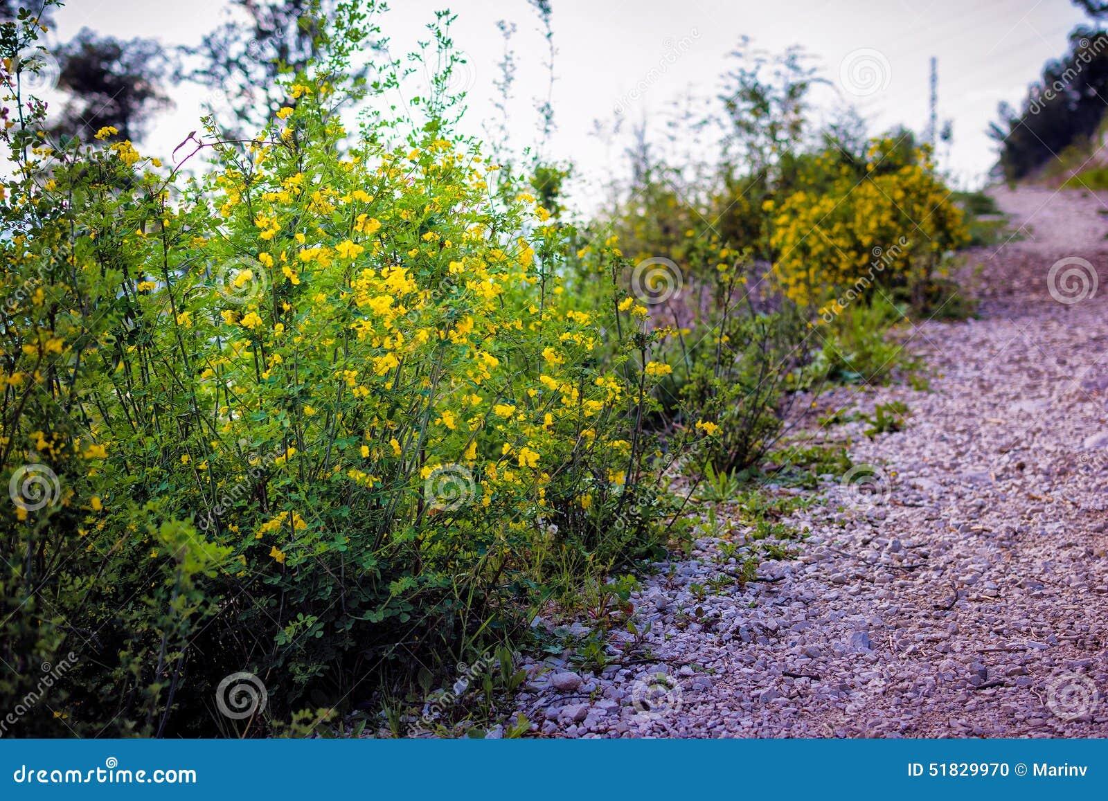 Peque as flores amarillas y arbustos verdes que crecen en - Arbustos con flores ...