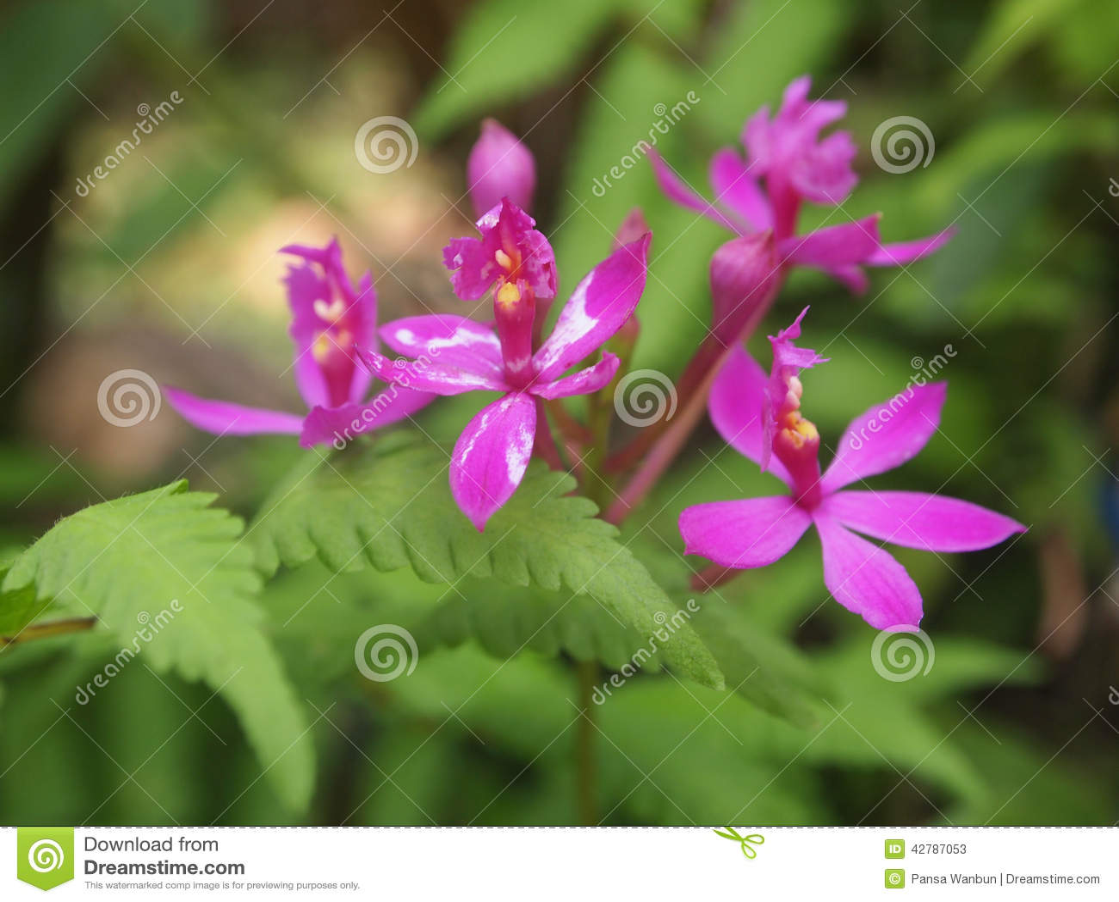 Pequeñas orquídeas púrpuras