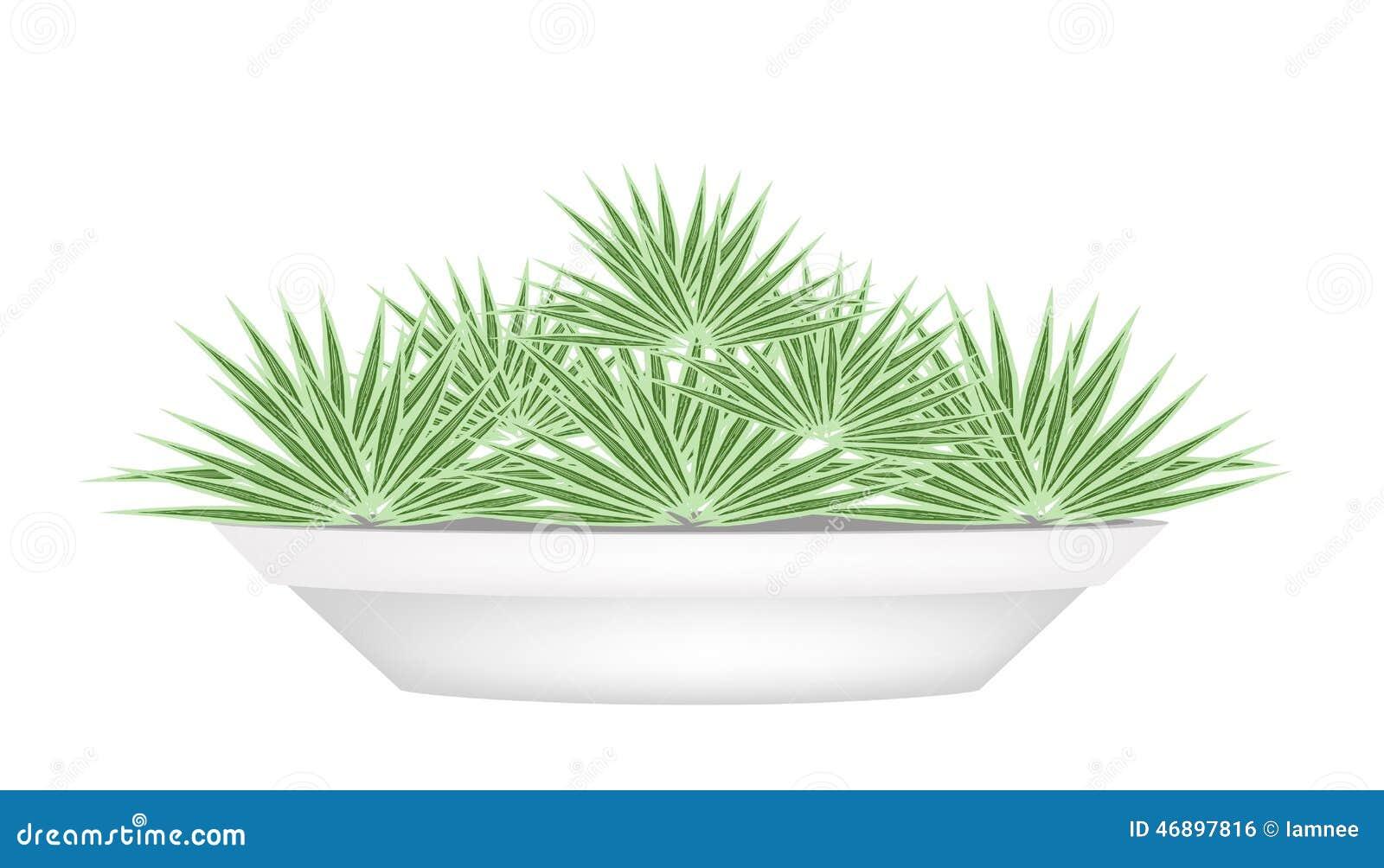 Peque as palmeras en una maceta ilustraci n del vector - Palmeras pequenas para jardin ...