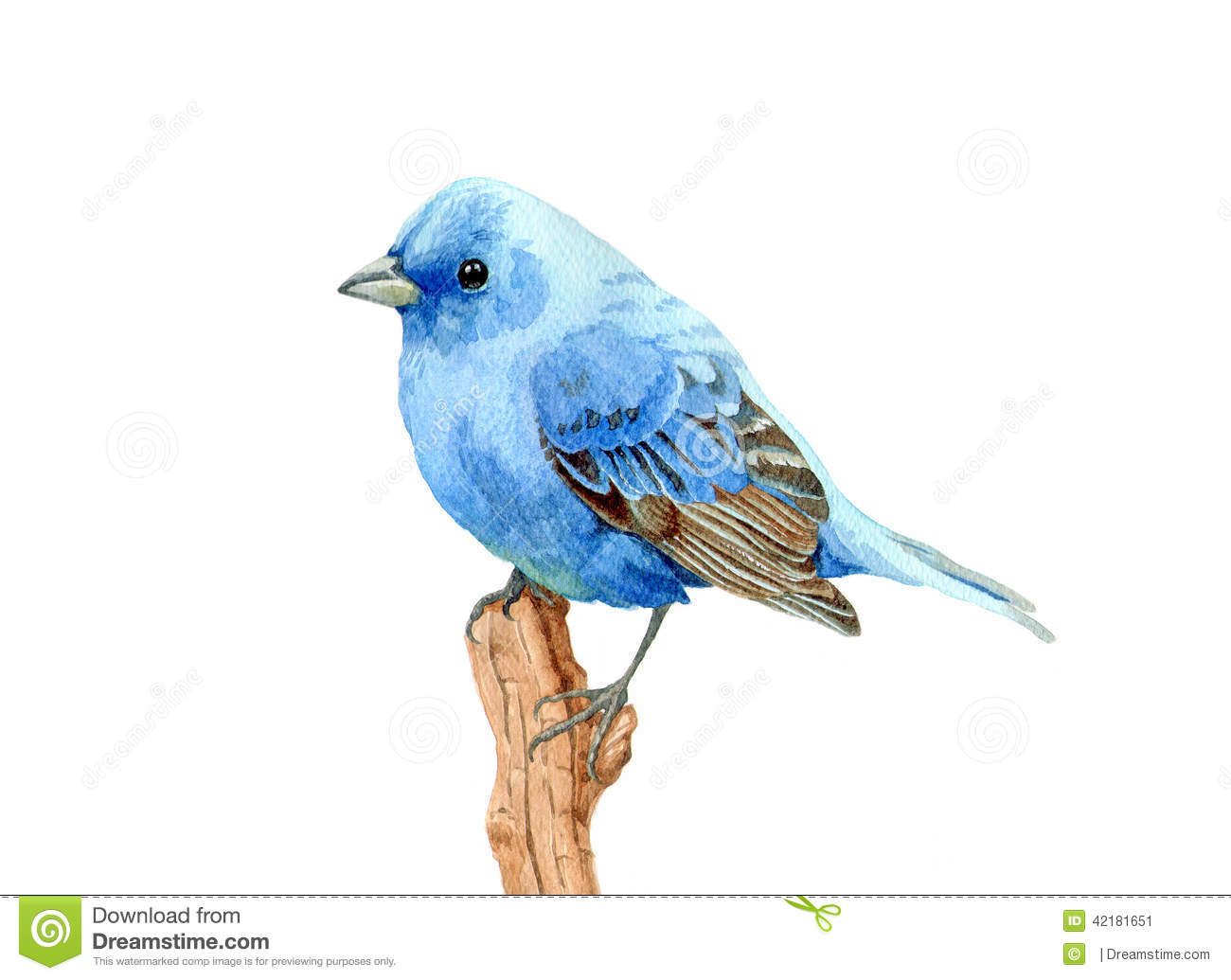 Mr Bluebird Paint Color