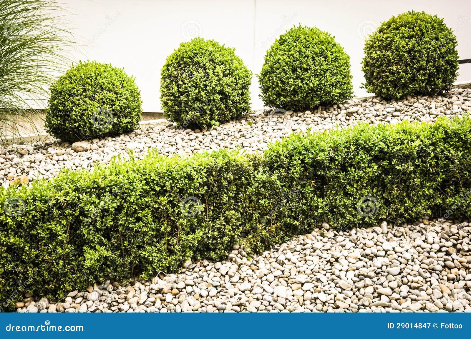 Peque os arbustos fotograf a de archivo libre de regal as for Arbustos jardin pequeno
