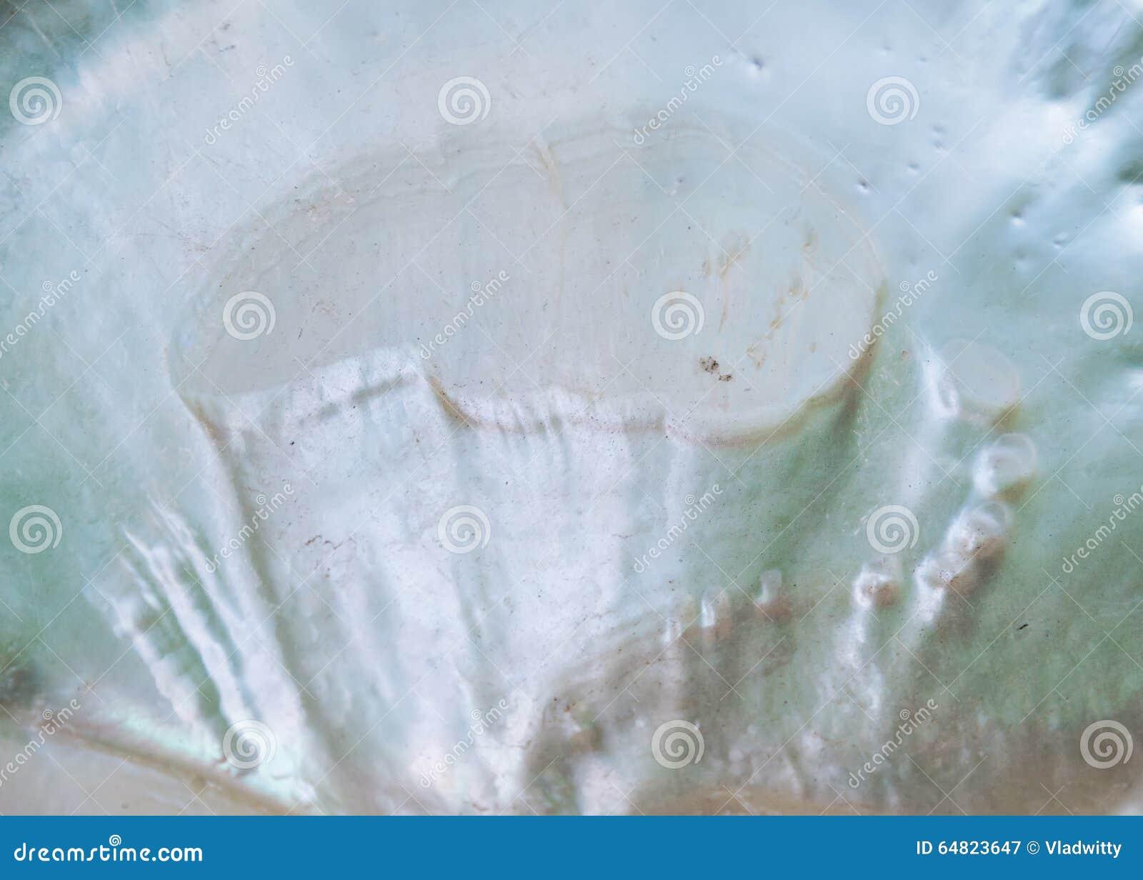 Perłowa seashell