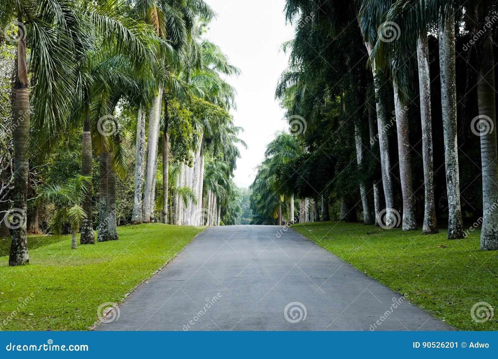 Peradeniya Koninklijke Botanische Tuinen - Kandy - Sri Lanka