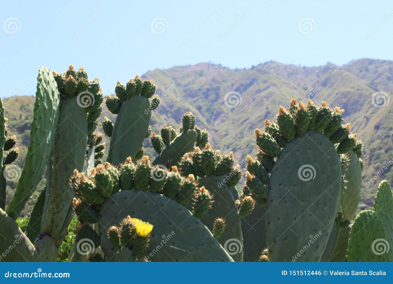 Peras espinhosas e montanhas sob o sol de Sicília