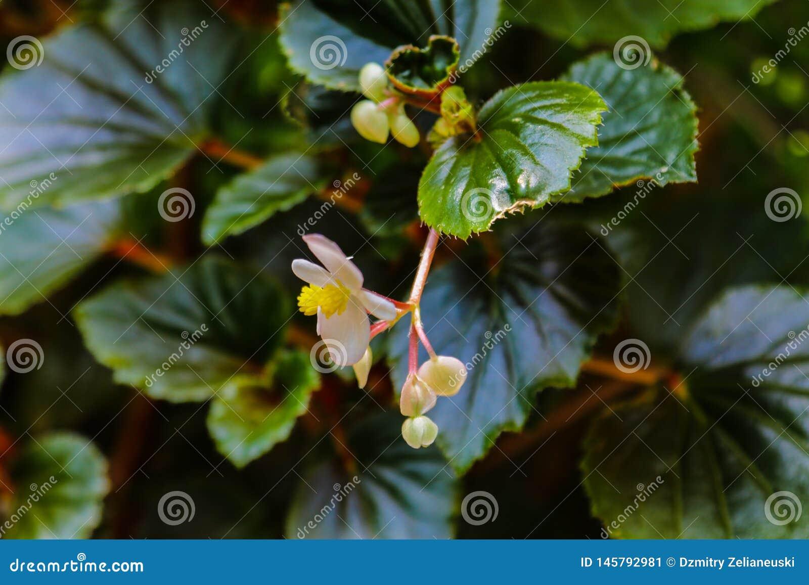 Perca acima das flores do jasmim no jardim na mola ou no ver?o
