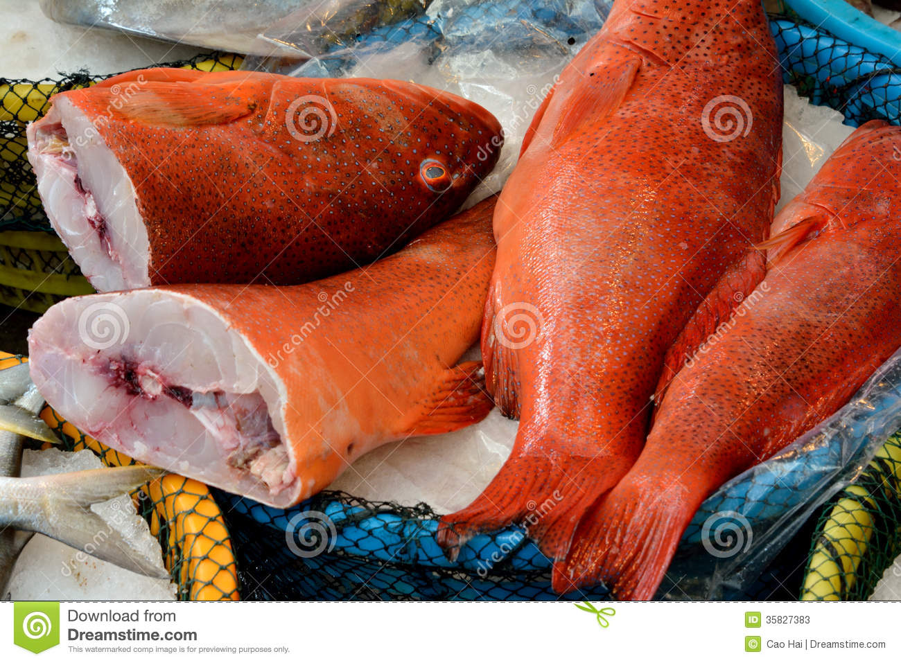Perca Fish In Red Selling In Market Stock Image - Image of marine ...