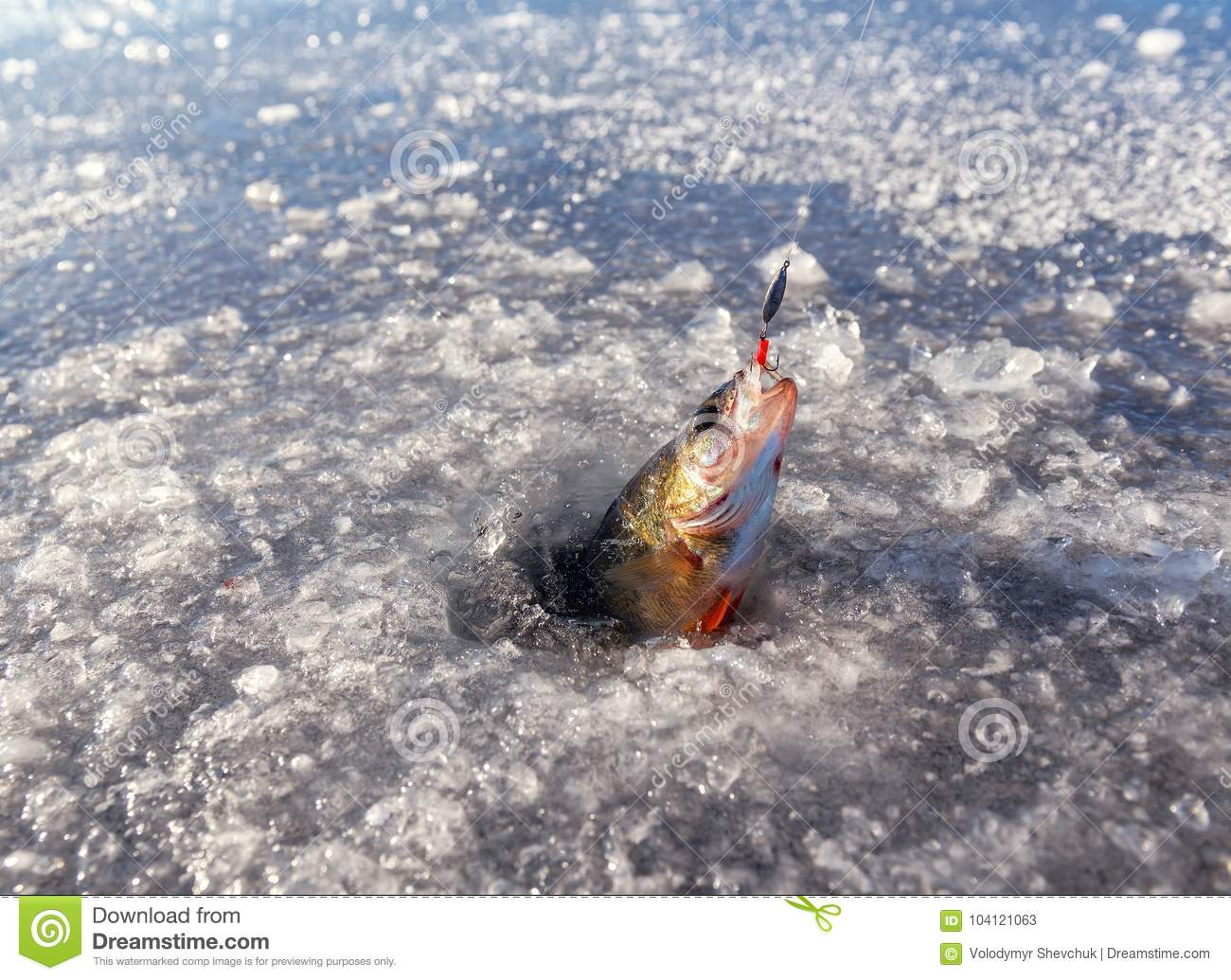 Fishing in the winter for perch. Winter fishing on ice
