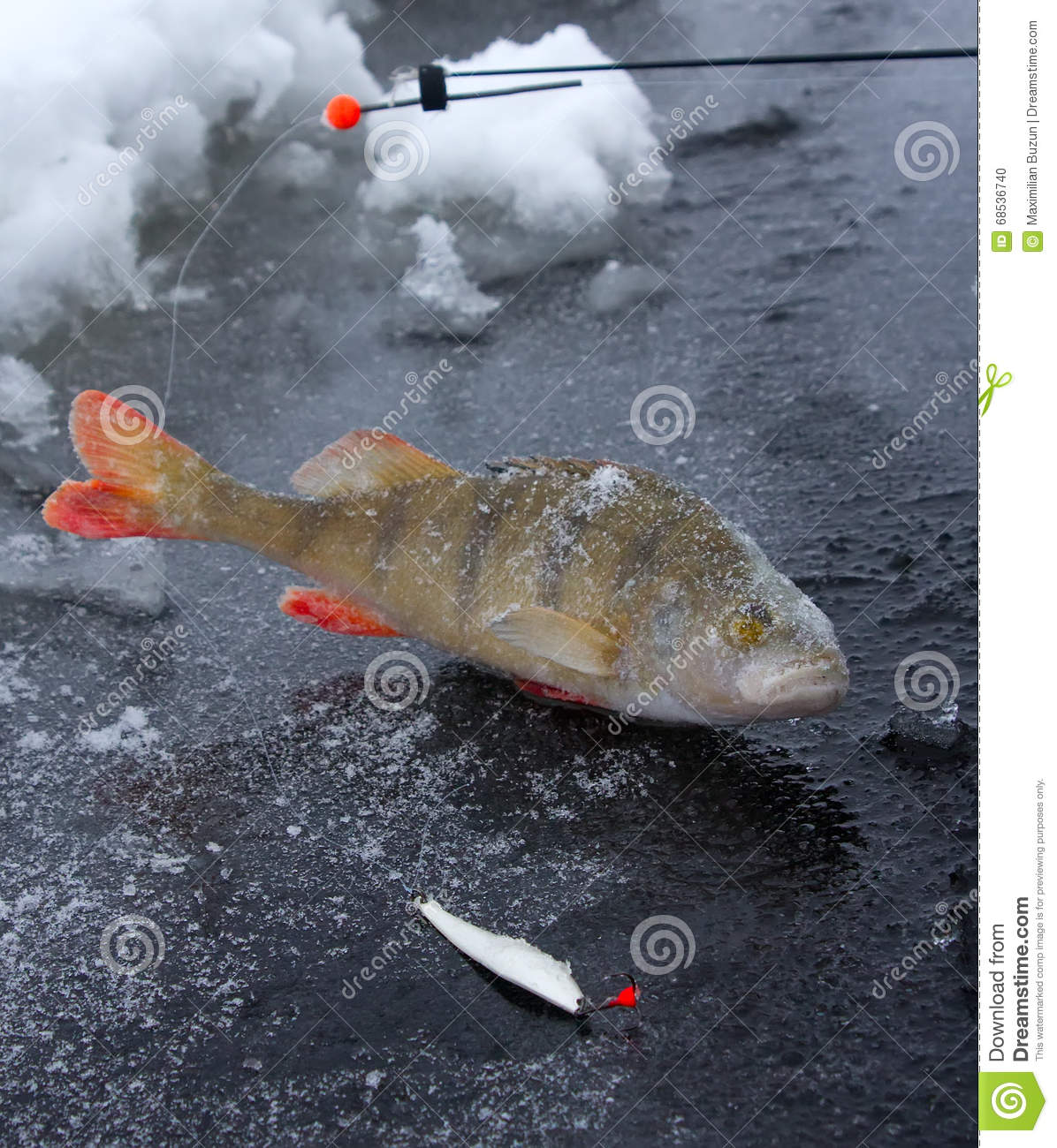 Perch Ice Fishing In Scandinavia Stock Photo - Image of
