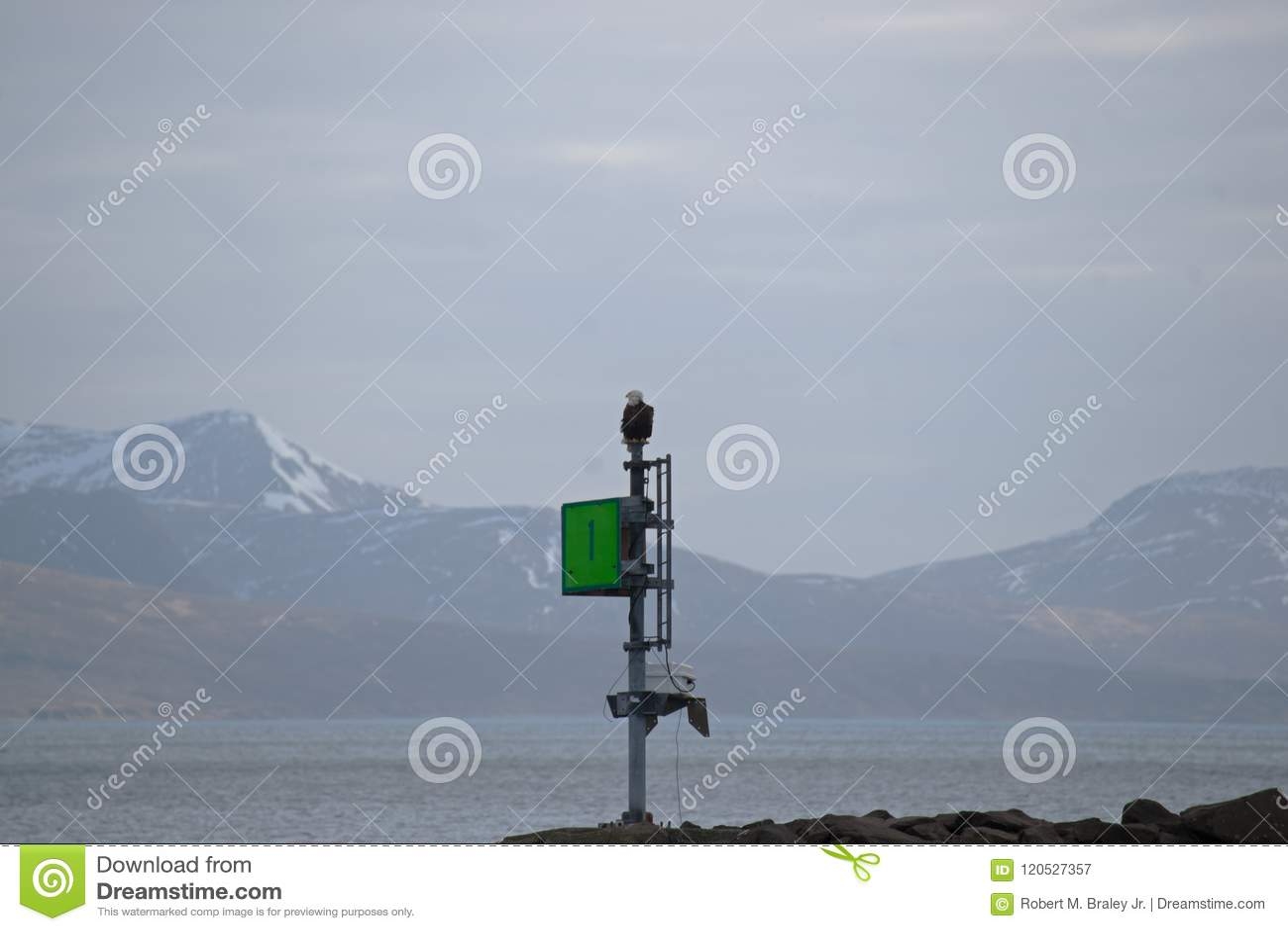 Bald Eagle King Cove Alaska