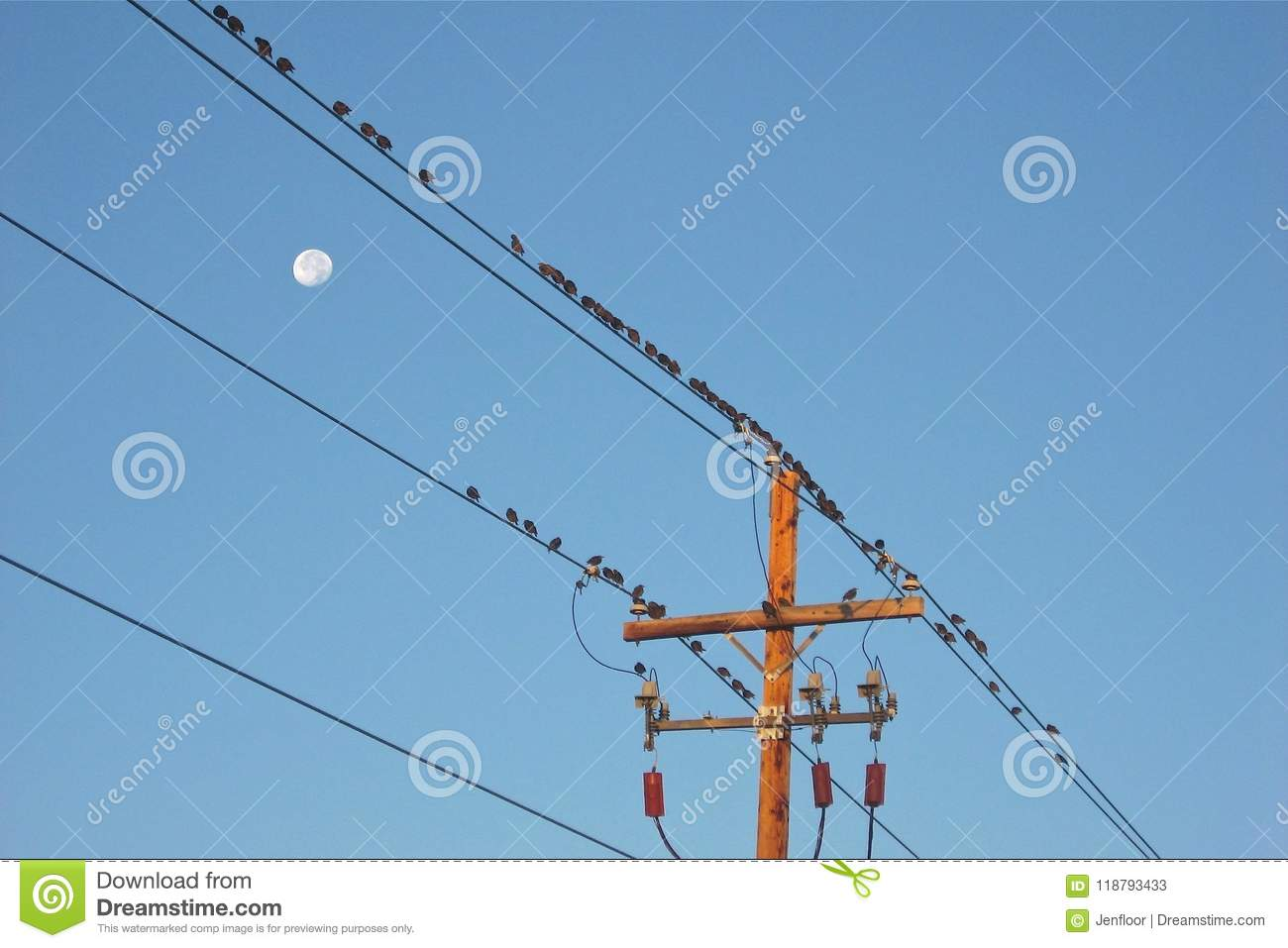 Perched on a Wire stock image. Image of happy, flock - 118793433