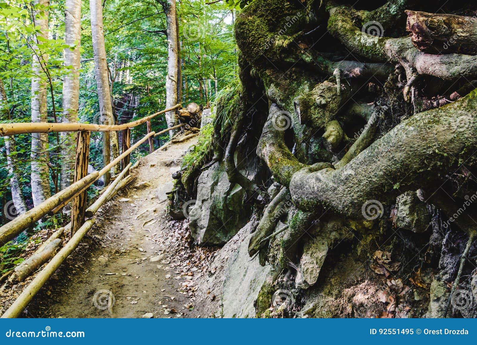 Percorso attraverso la foresta verde