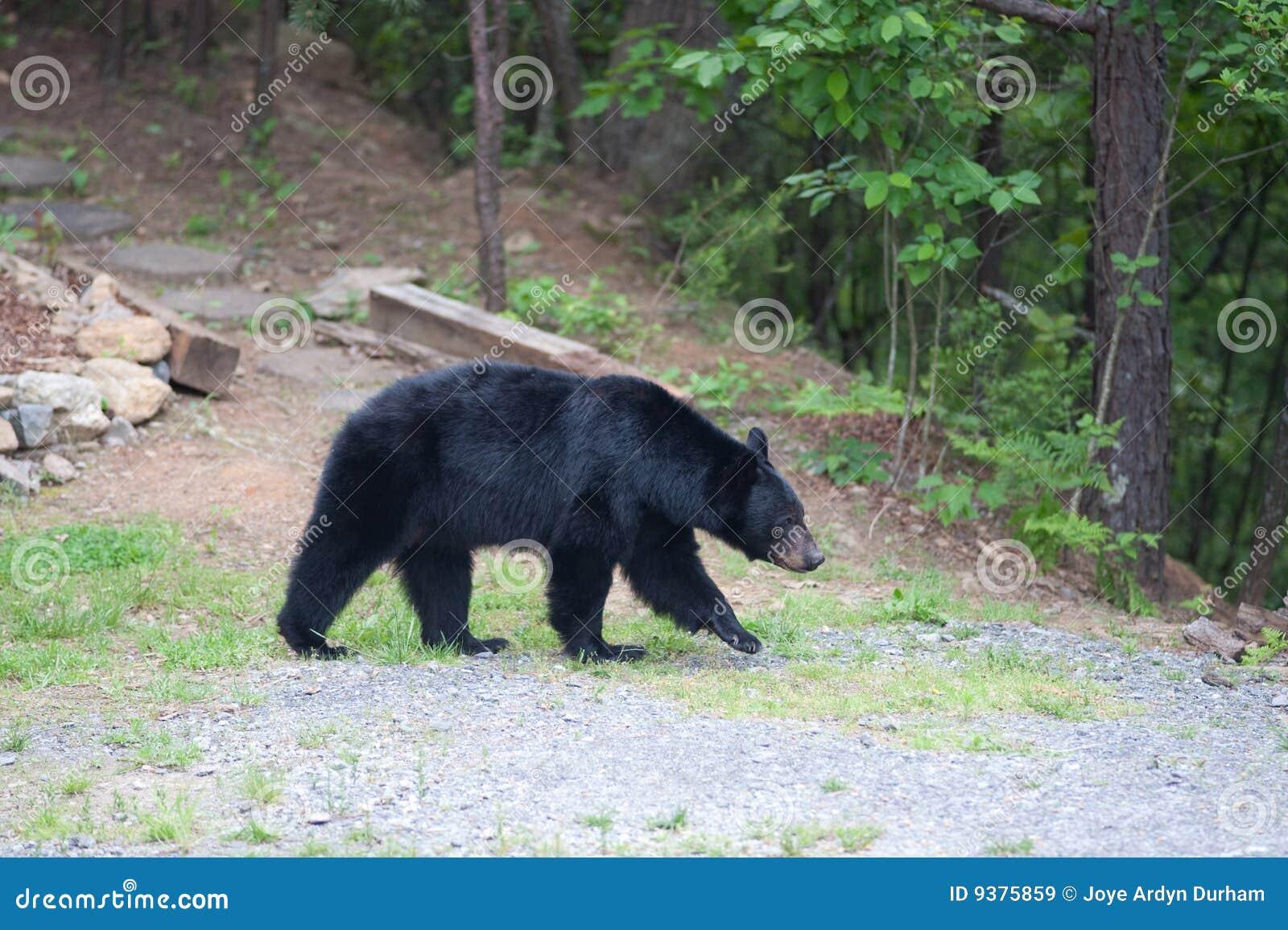 Percorso dell orso