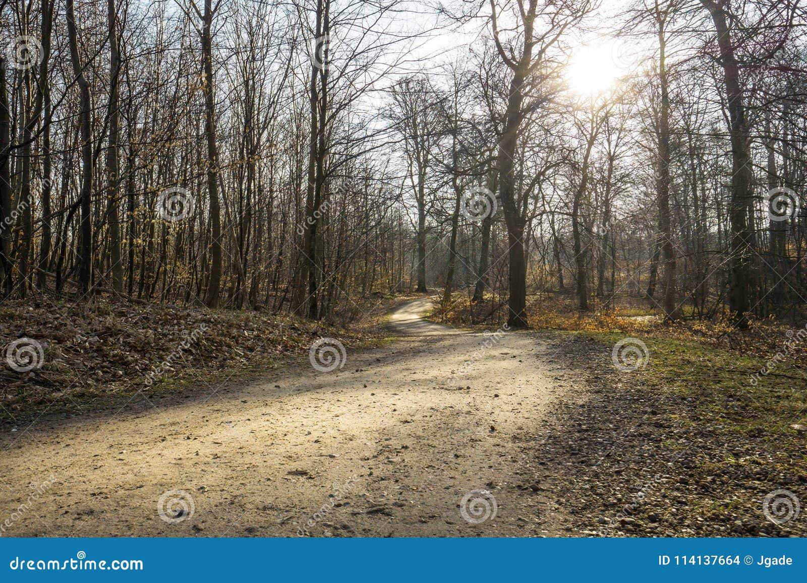 Percorso della sporcizia nella foresta