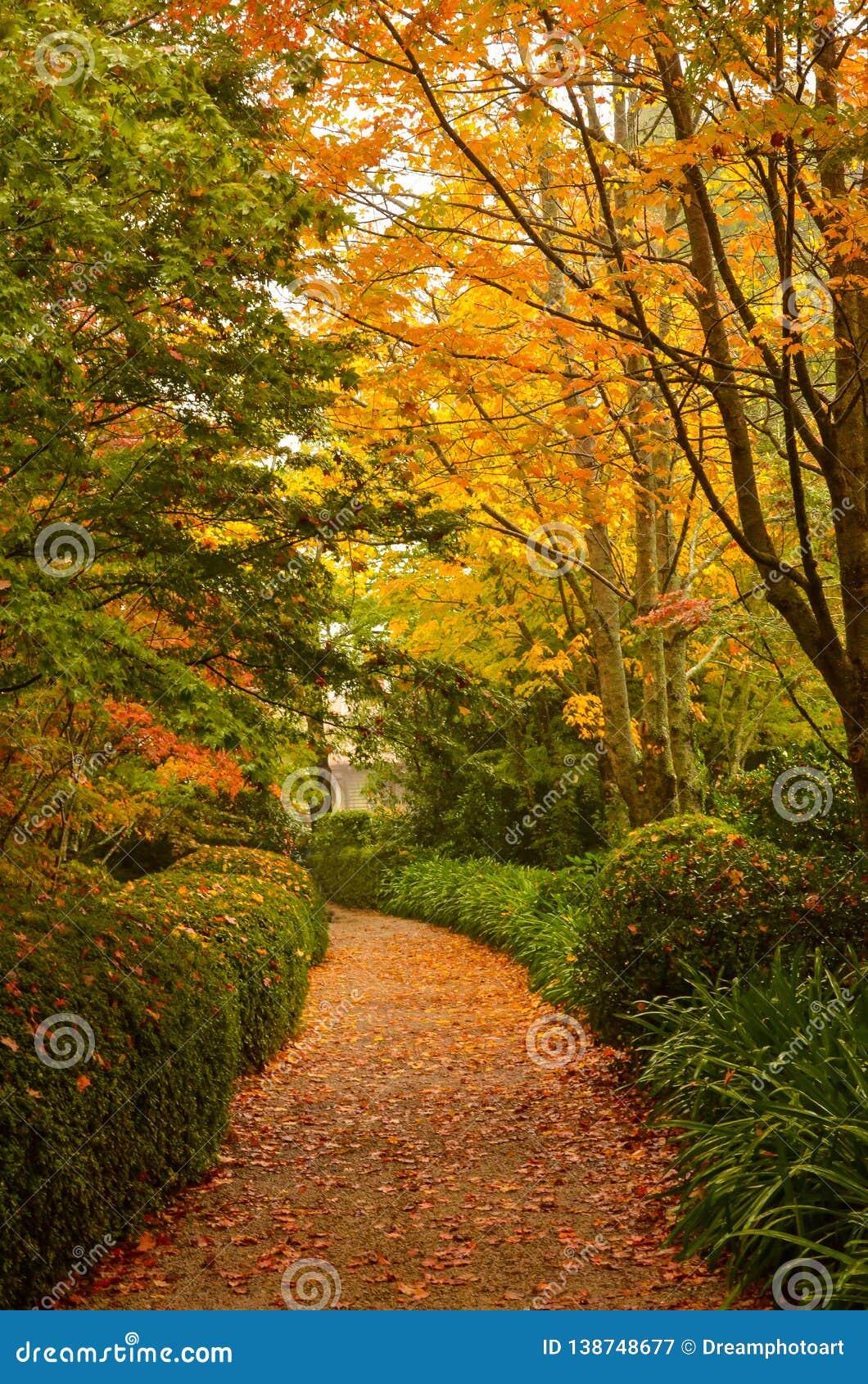 Percorso di camminata di Autumn Trees Beside A