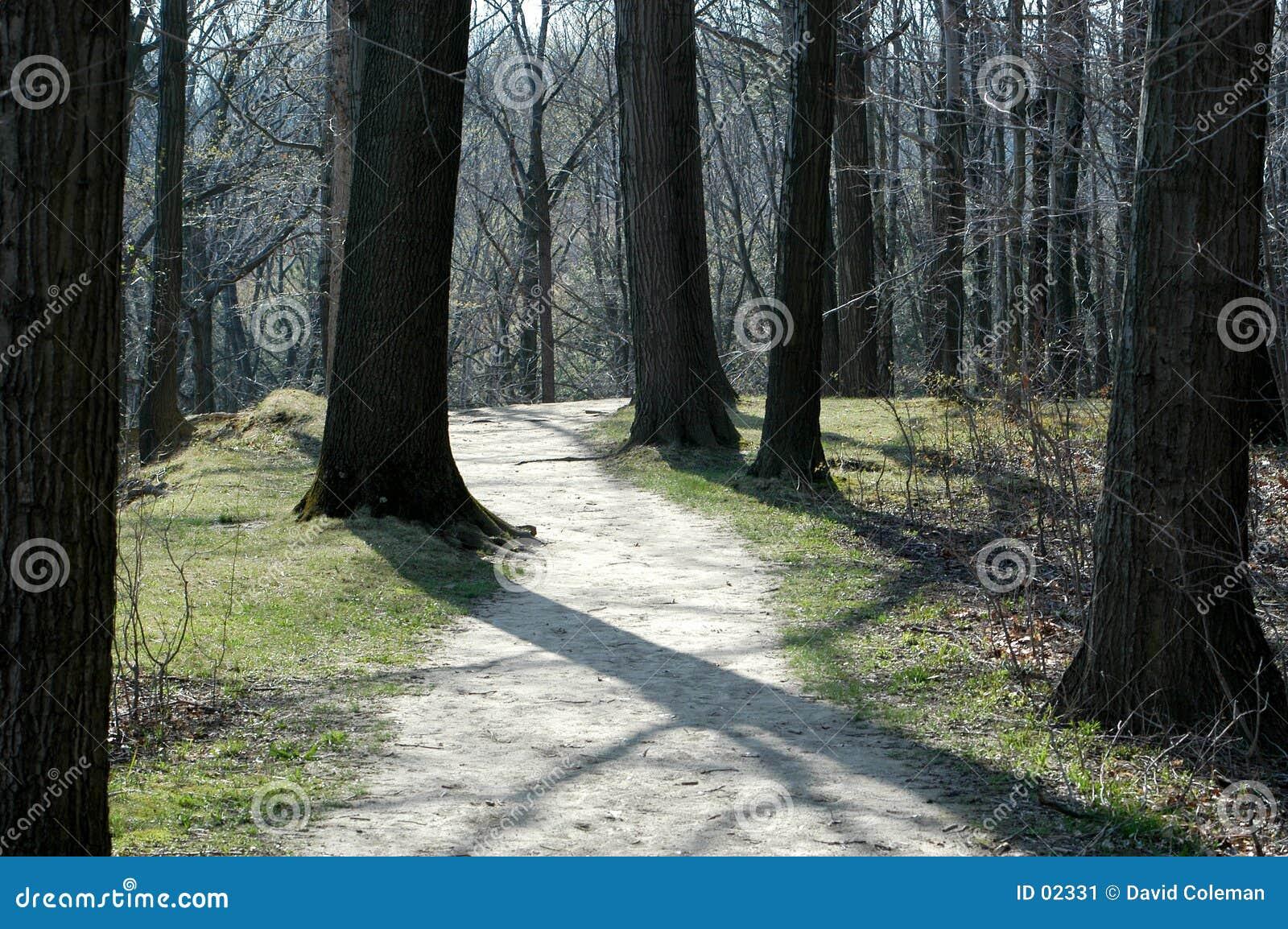 Percorso di foresta