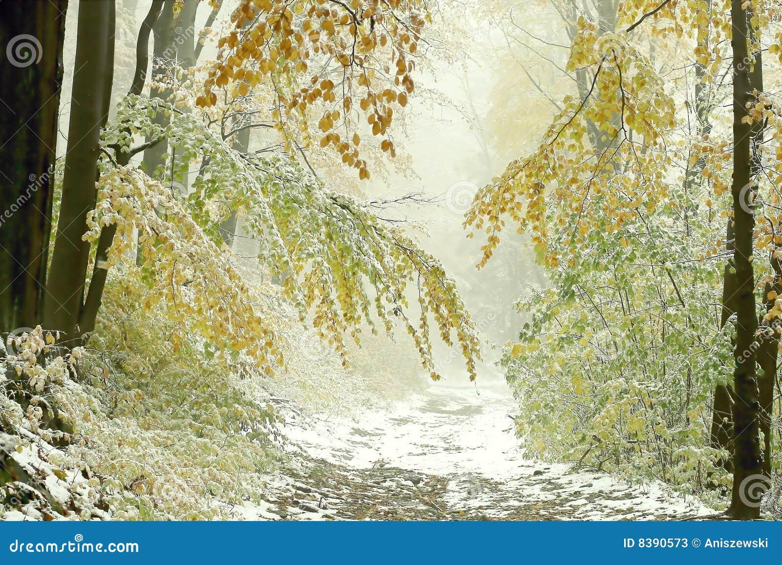 Percorso di foresta nebbioso di autunno con prima neve