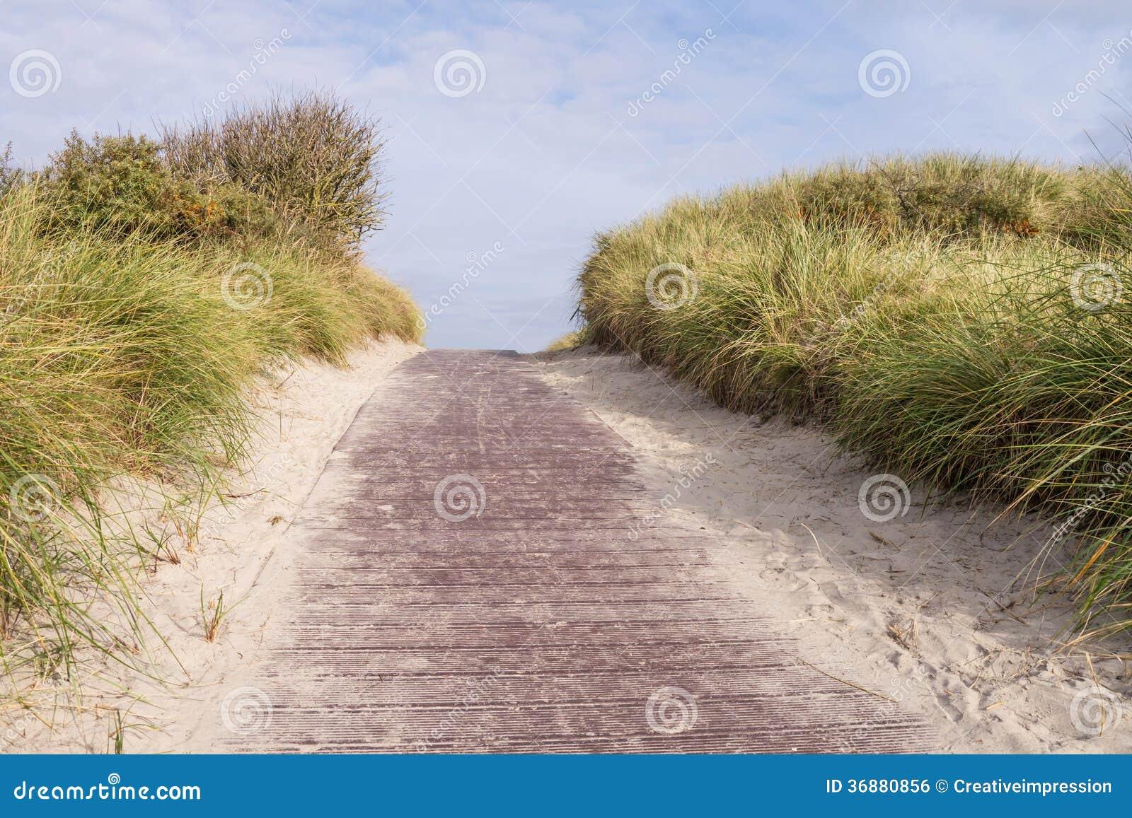 Download Percorso fra le dune fotografia stock. Immagine di stagione - 36880856