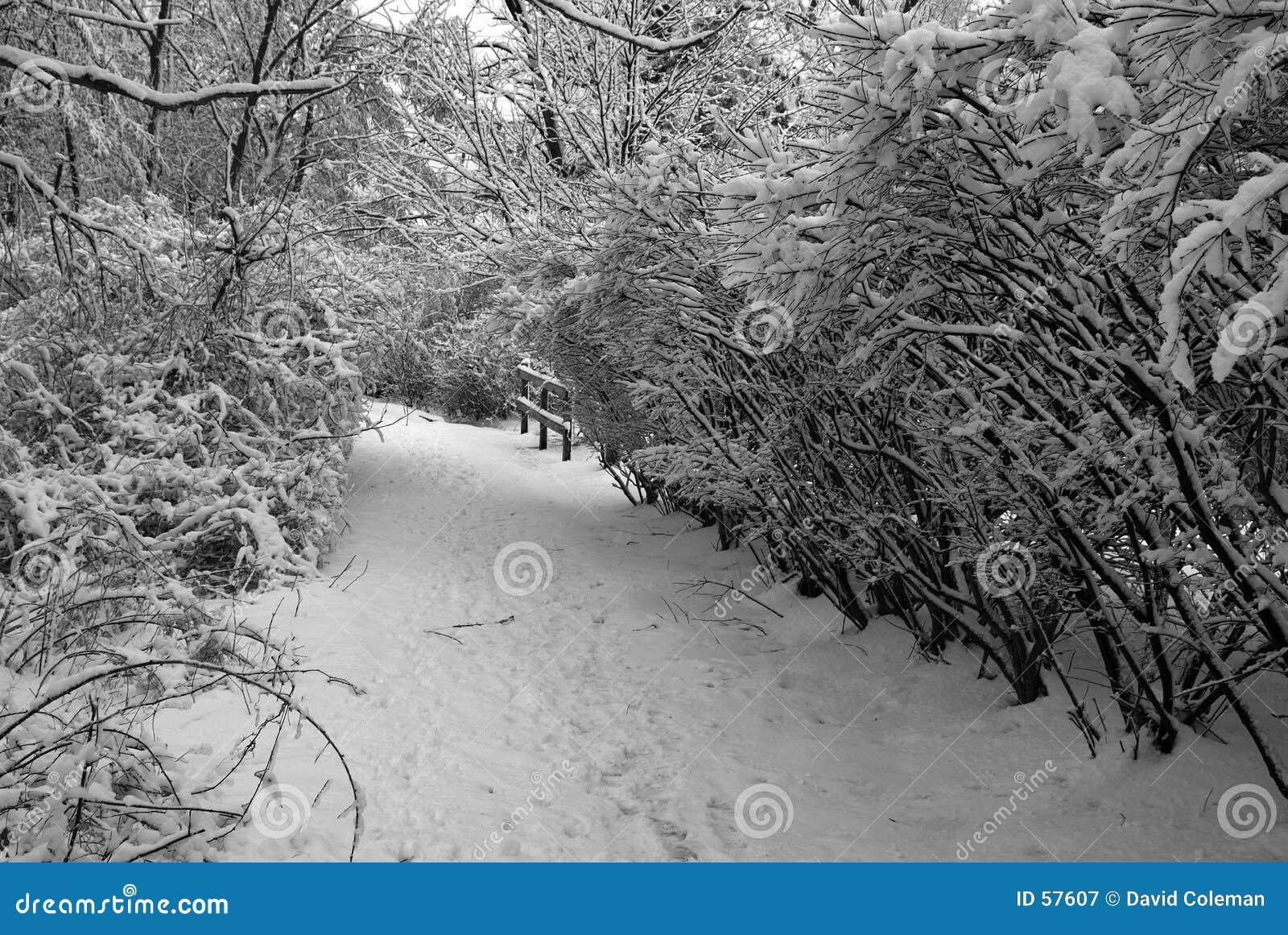 Percorso in inverno