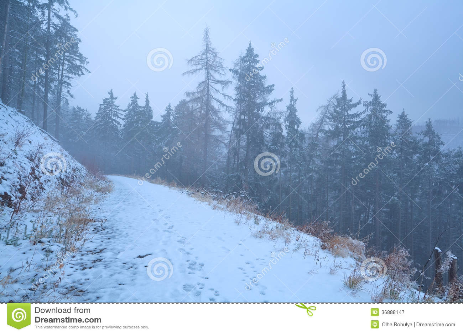 Download Percorso In Montagne Nebbiose Di Harz Di Inverno Immagine Stock - Immagine di neve, esterno: 36888147