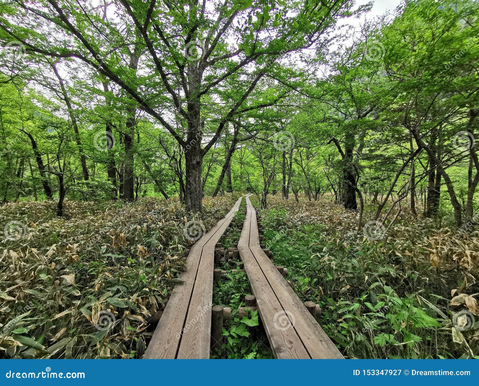 Percorso nella foresta