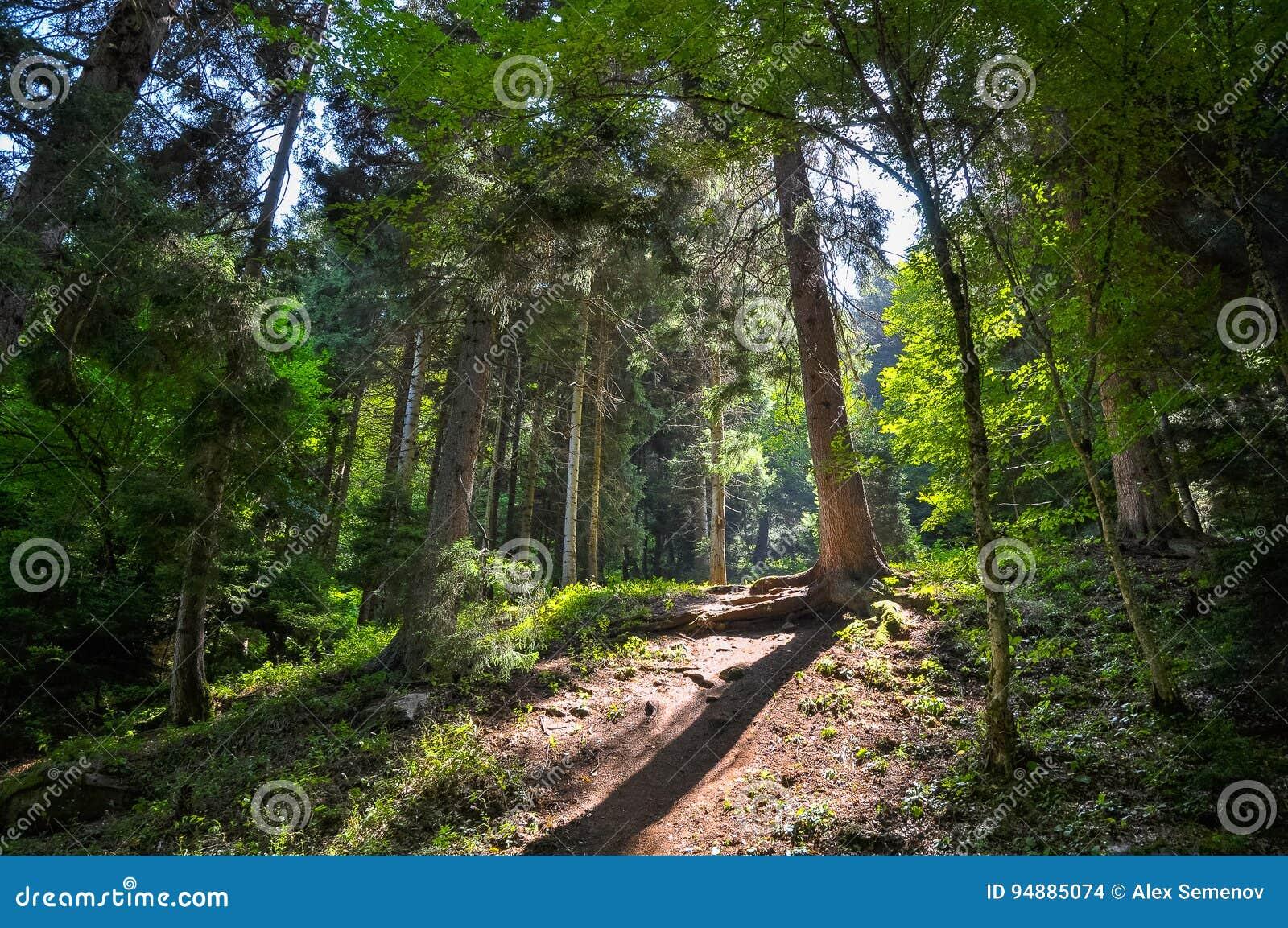 Percorso pittoresco in una foresta soleggiata di estate
