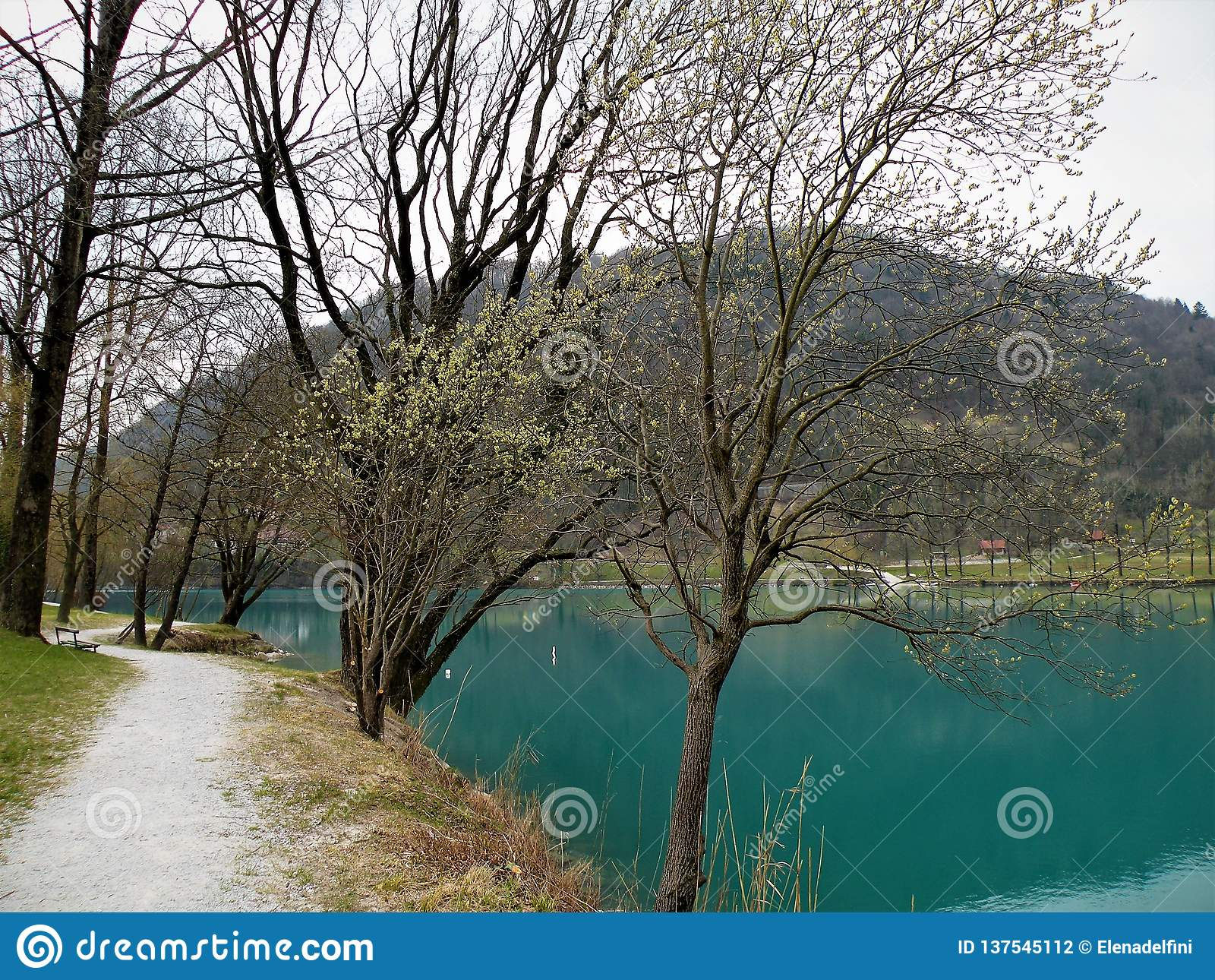 Percorso sabbioso lungo il lago con molti alberi