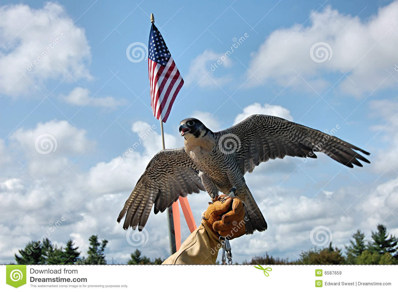 Peregrine falcon with flag