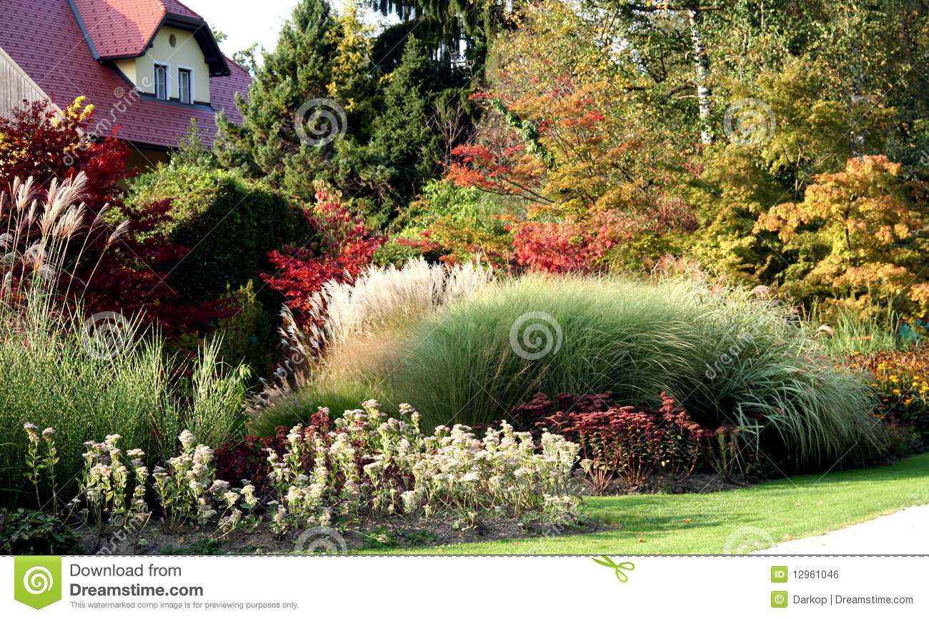 Perennial Grass Royalty Free Stock Image Image 12961046
