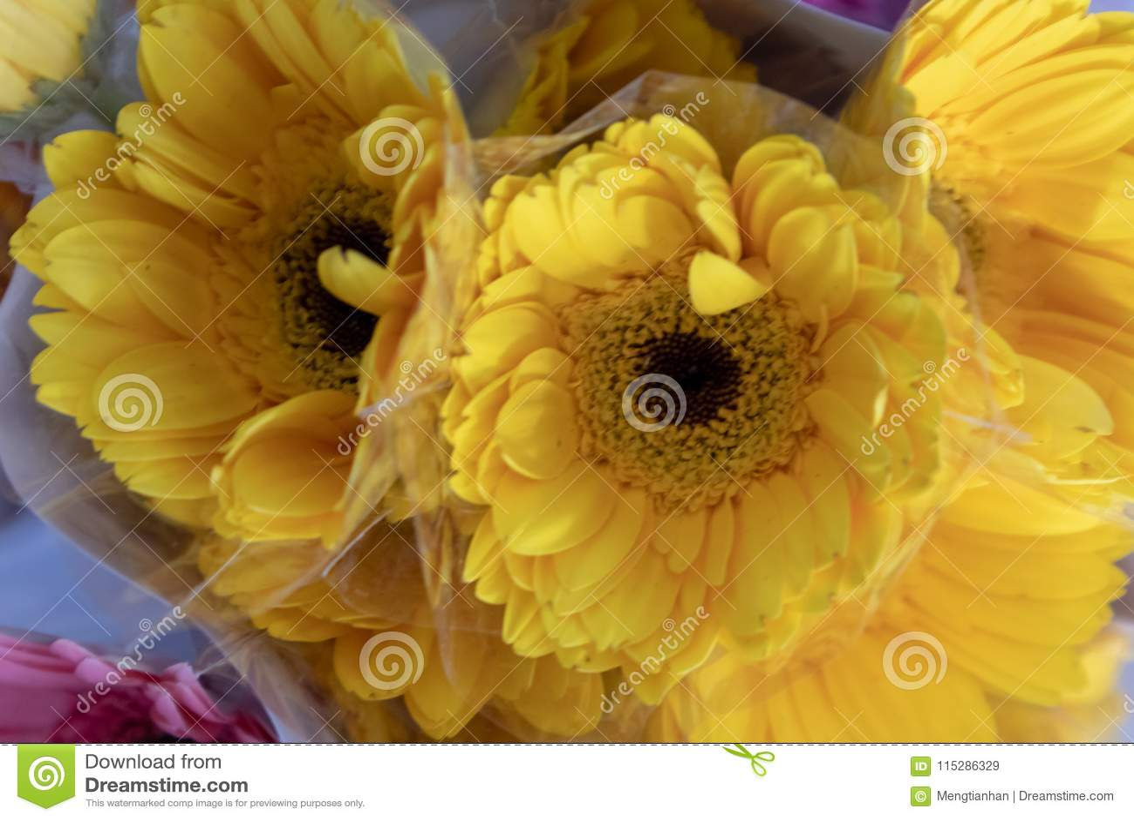 Gerbera Jamesonii Bolus Fresh Cut Flowers Stock Image Image Of