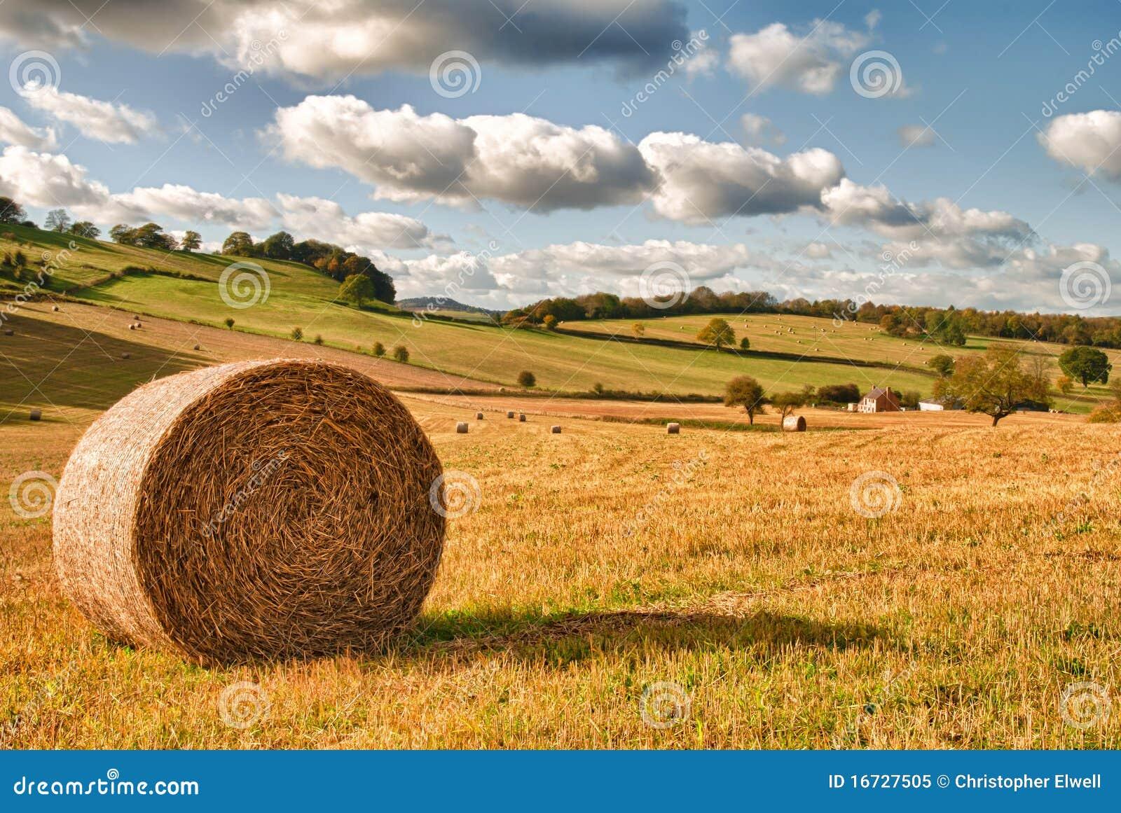 Perfect Harvest Landscape