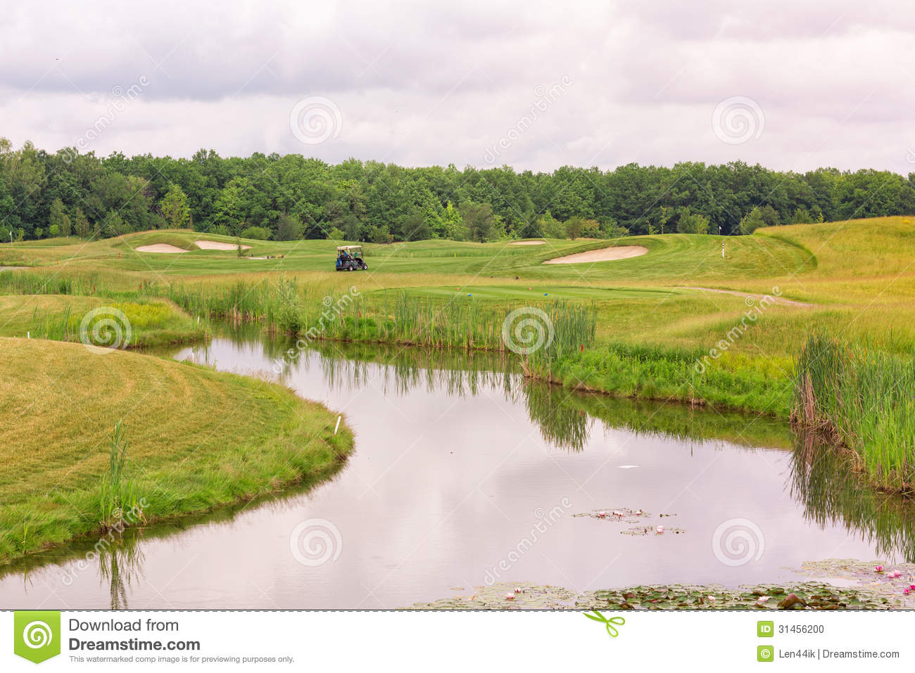 Perfect Wavy Ground With Green Grass On A Golf Field Stock