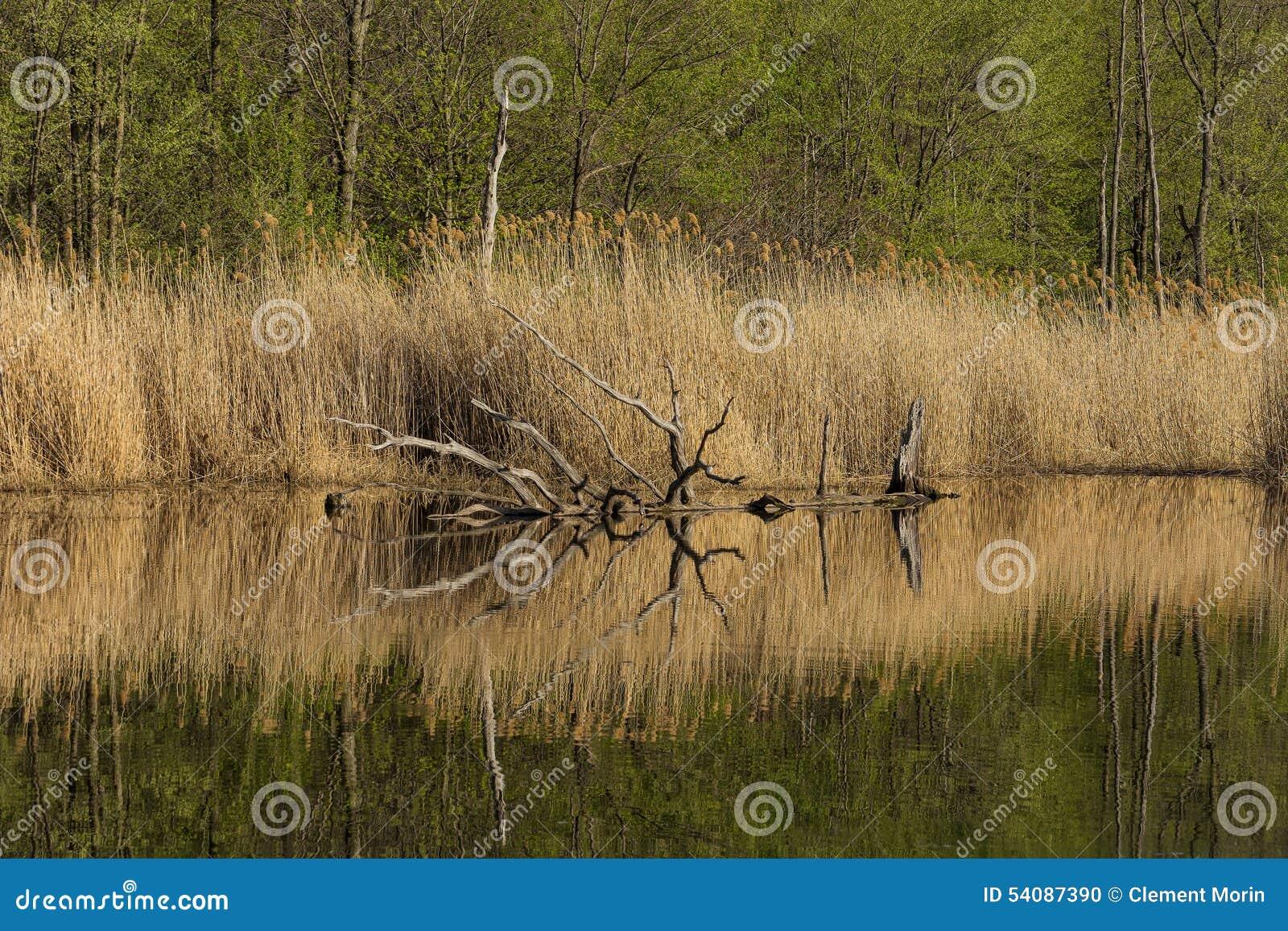 Perfecte afternmoon op het meer