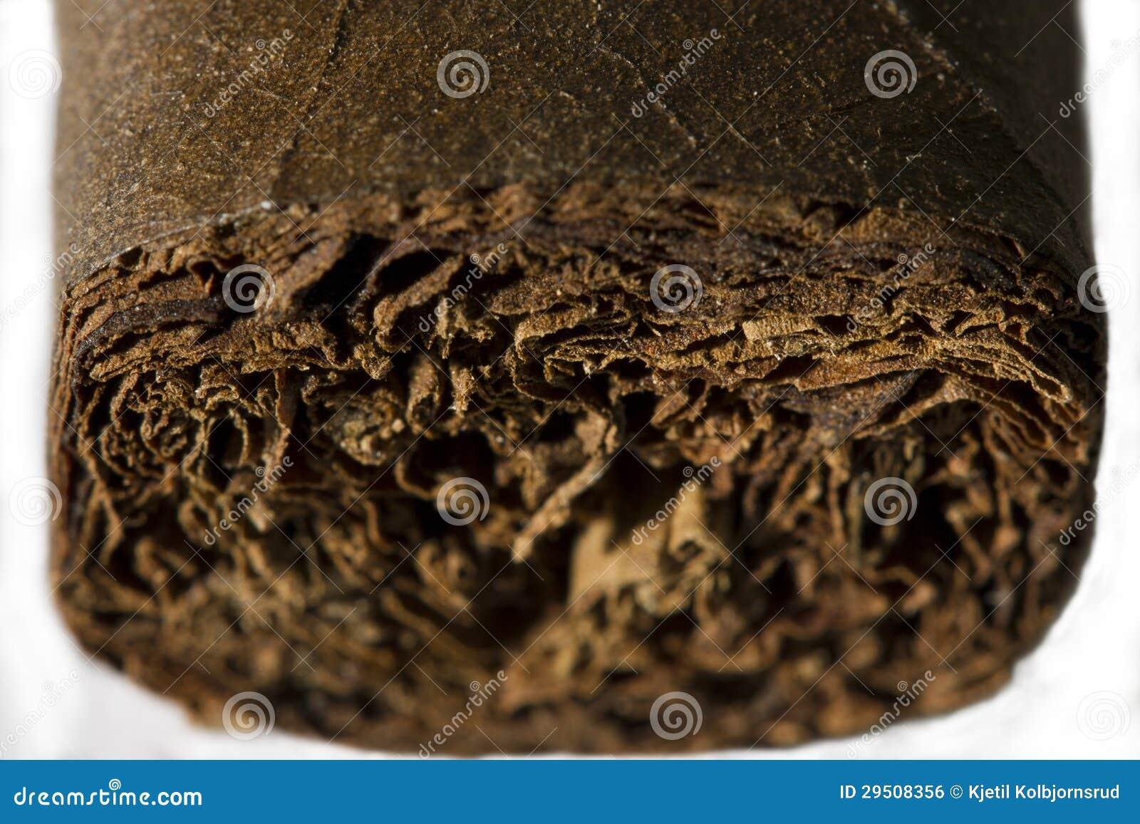 Perfecte gerolde sigaar