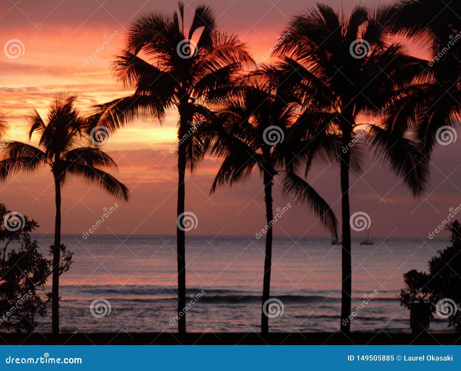 Perfei??o nas palmeiras