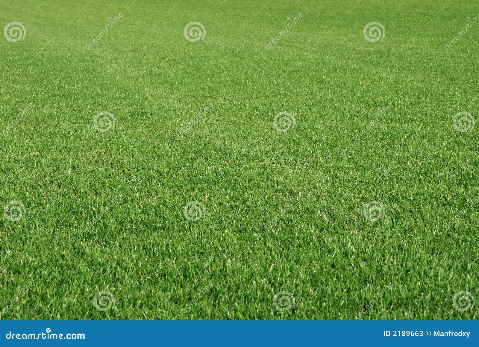 Perfekt lawn