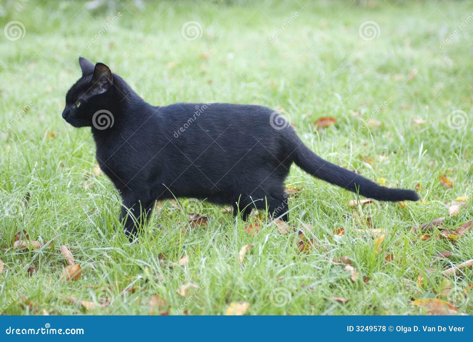 Perfil de un gato negro