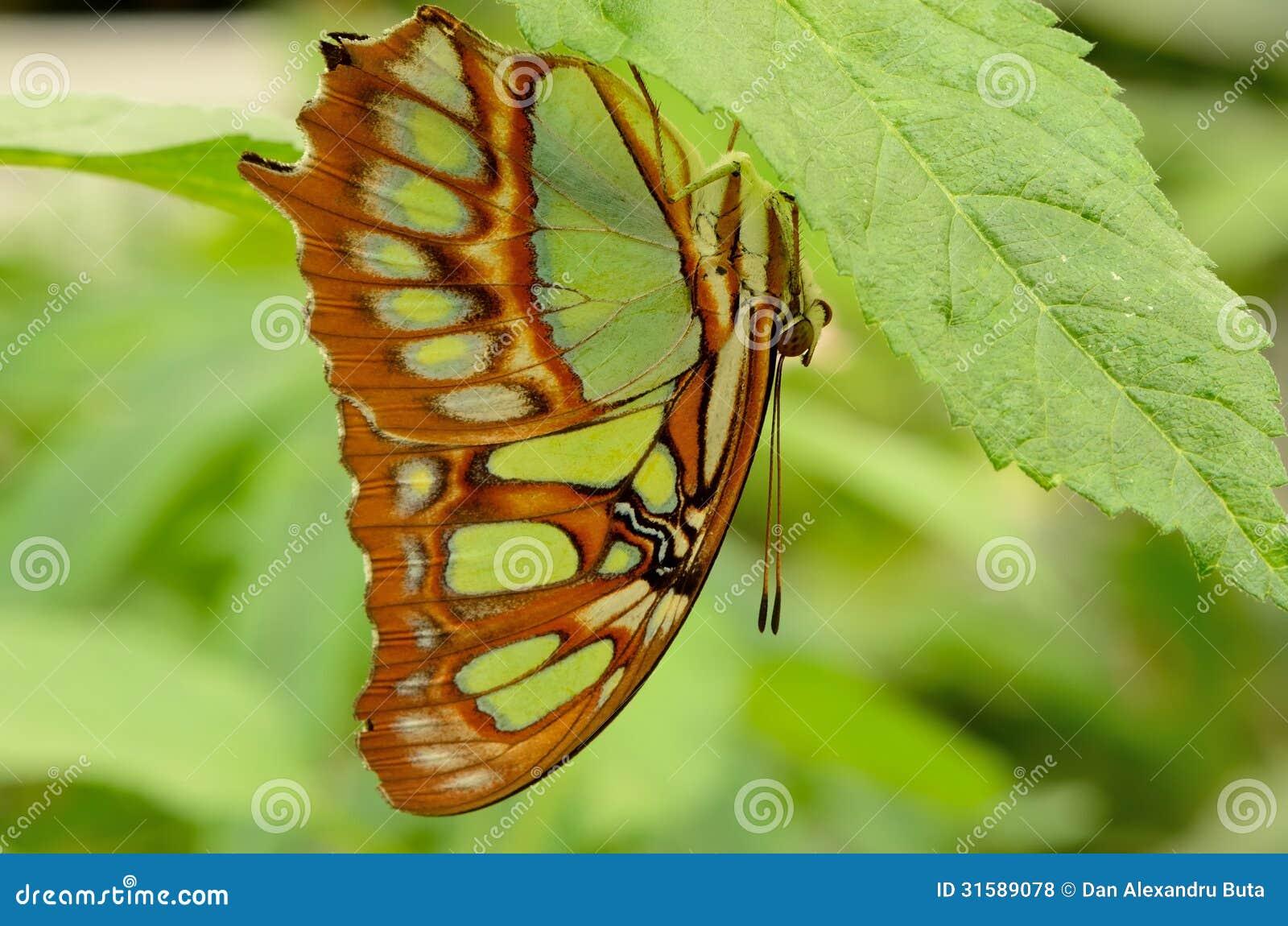 Perfil de una mariposa en una hoja