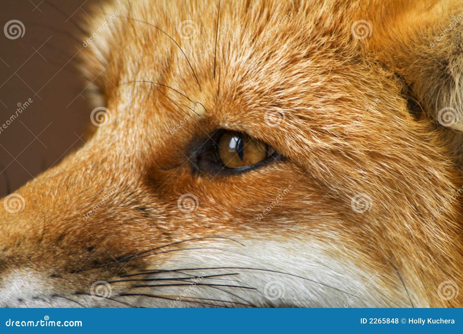Perfil do Fox vermelho