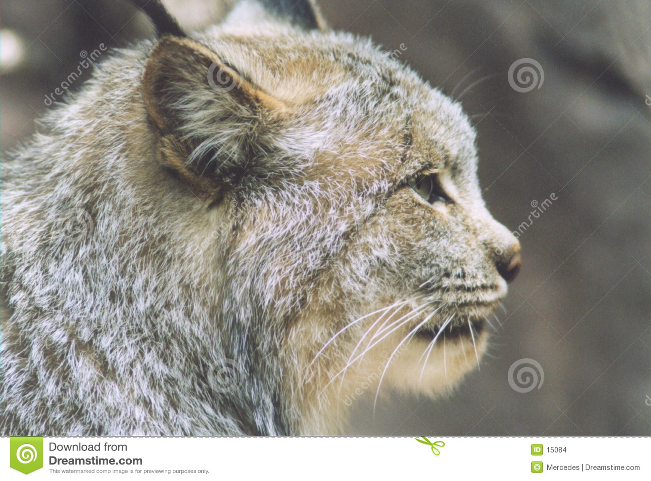 Perfil do lince