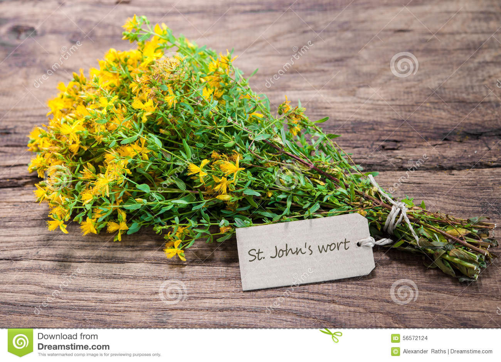 Download Perforatum Hypericum ή Wort του ST John Στοκ Εικόνες - εικόνα από ιατρικός, healer: 56572124