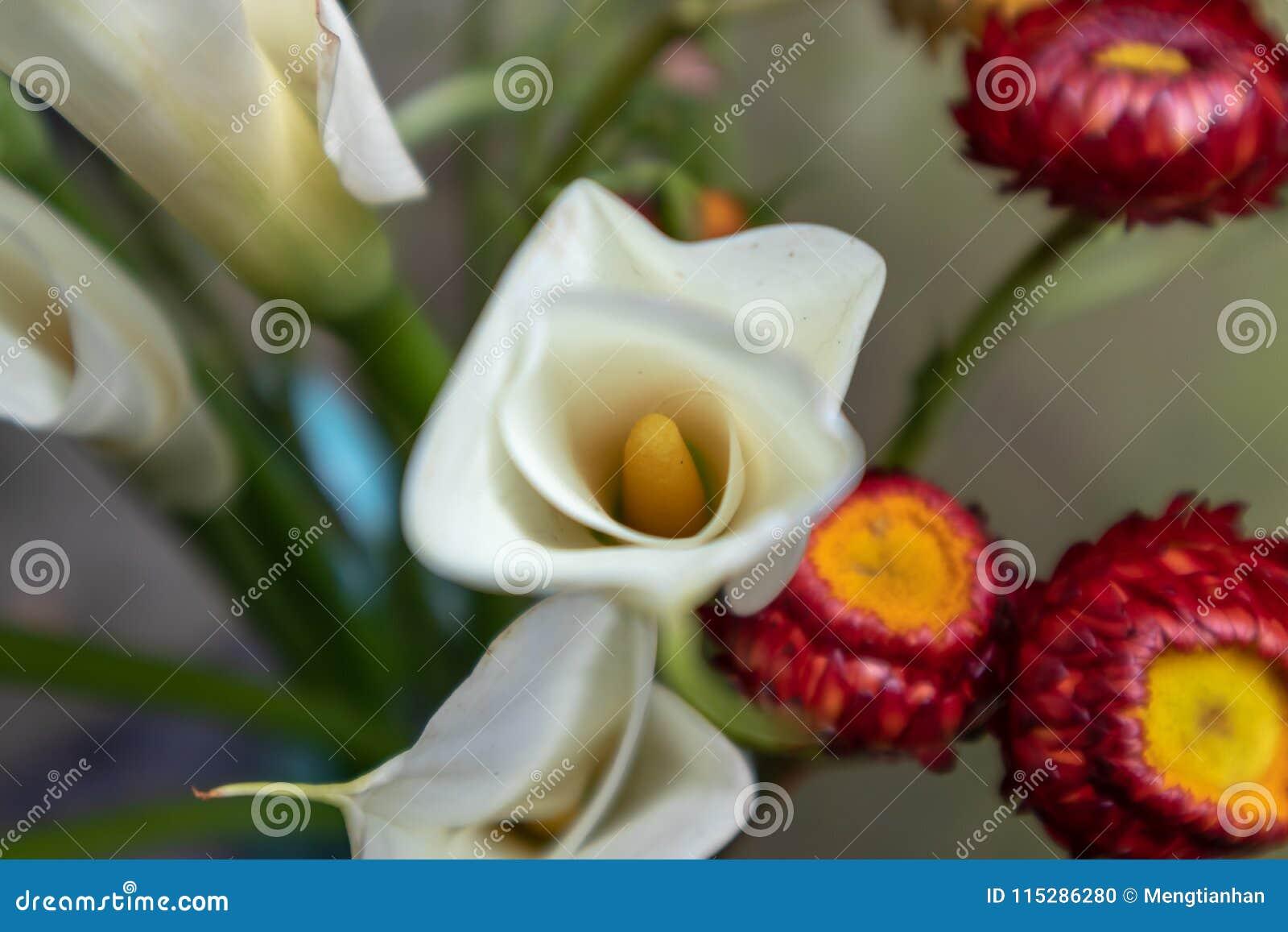 Lilium Casa Blanca Fresh Cut Flowers Stock Photo Image Of
